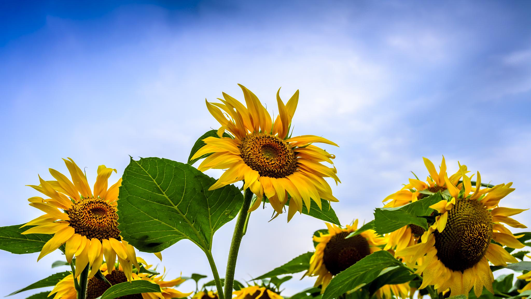 Sunny by nedelciu.alexandru.1