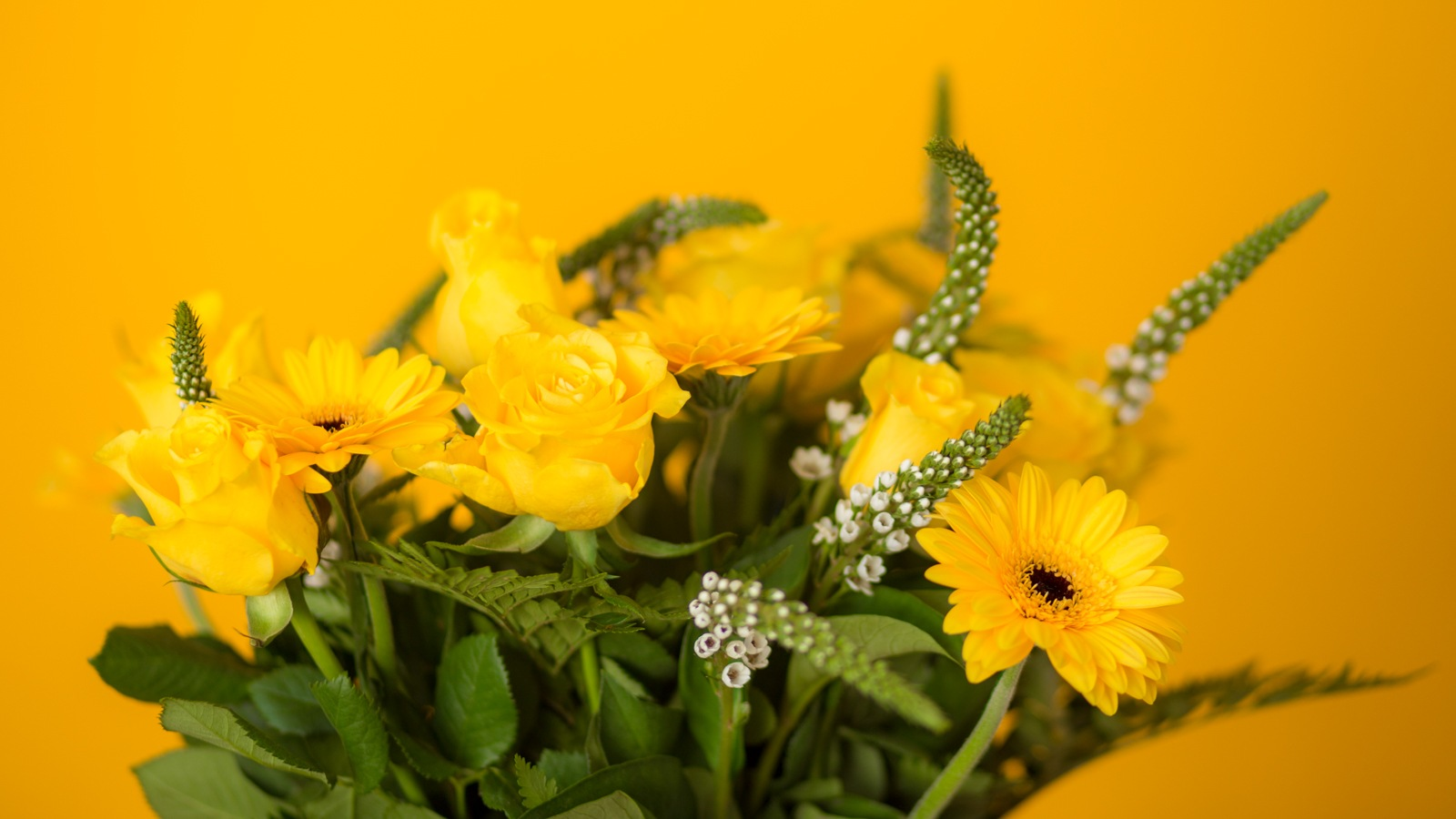 yellow by Marco Jansen