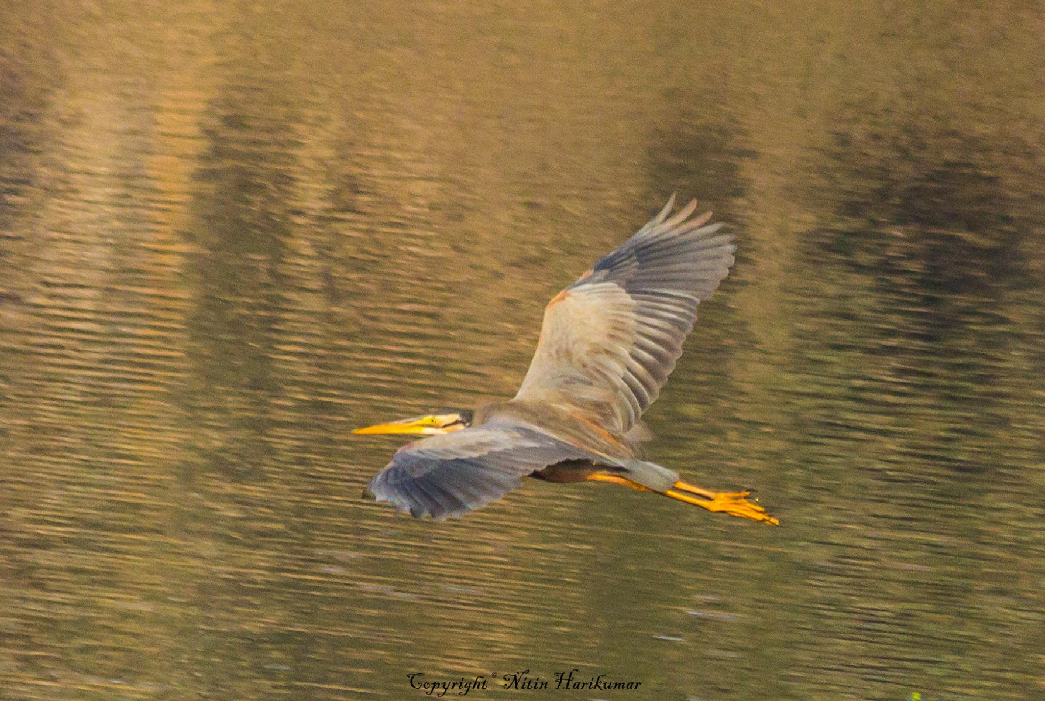 In Flight by Nitin Harikumar