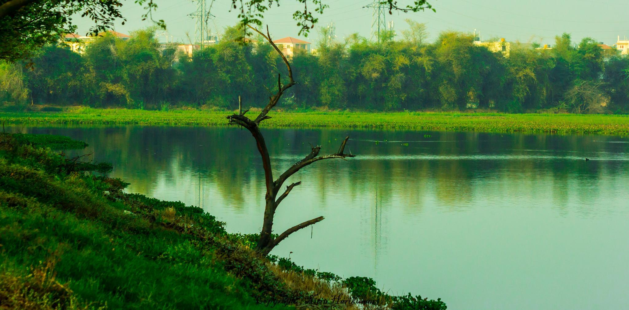 lake by Nitin Harikumar