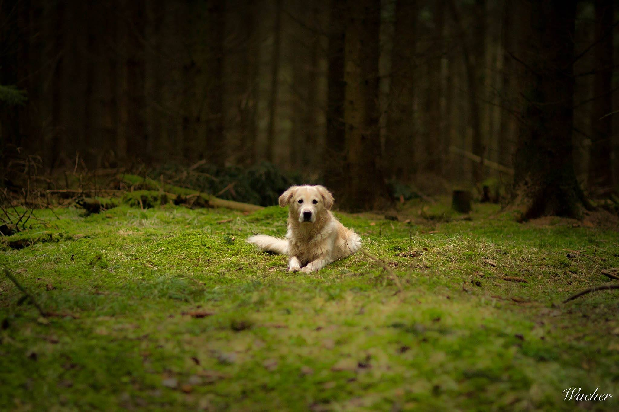 Secret place by Wacherphoto