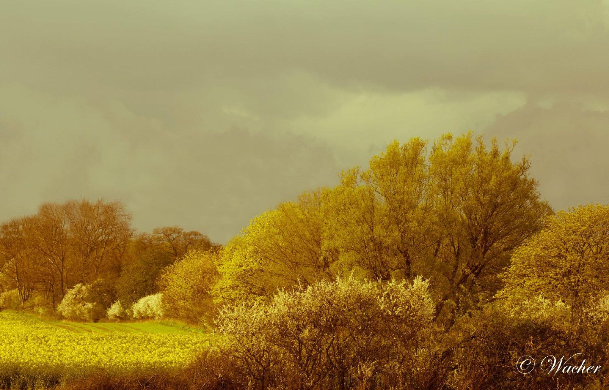 autumn by Wacherphoto