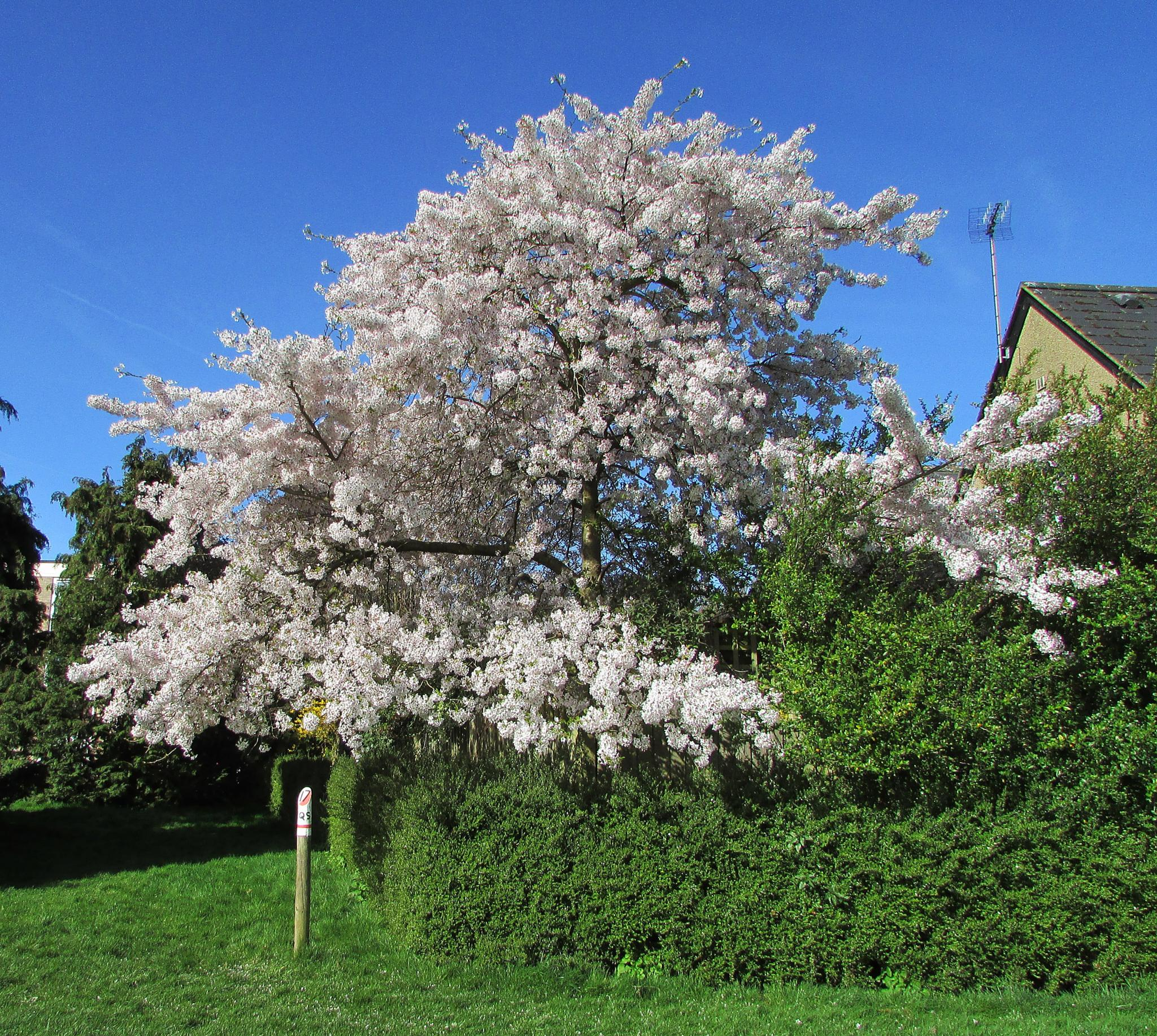 Blossoming in the sunshine. by Rob. w
