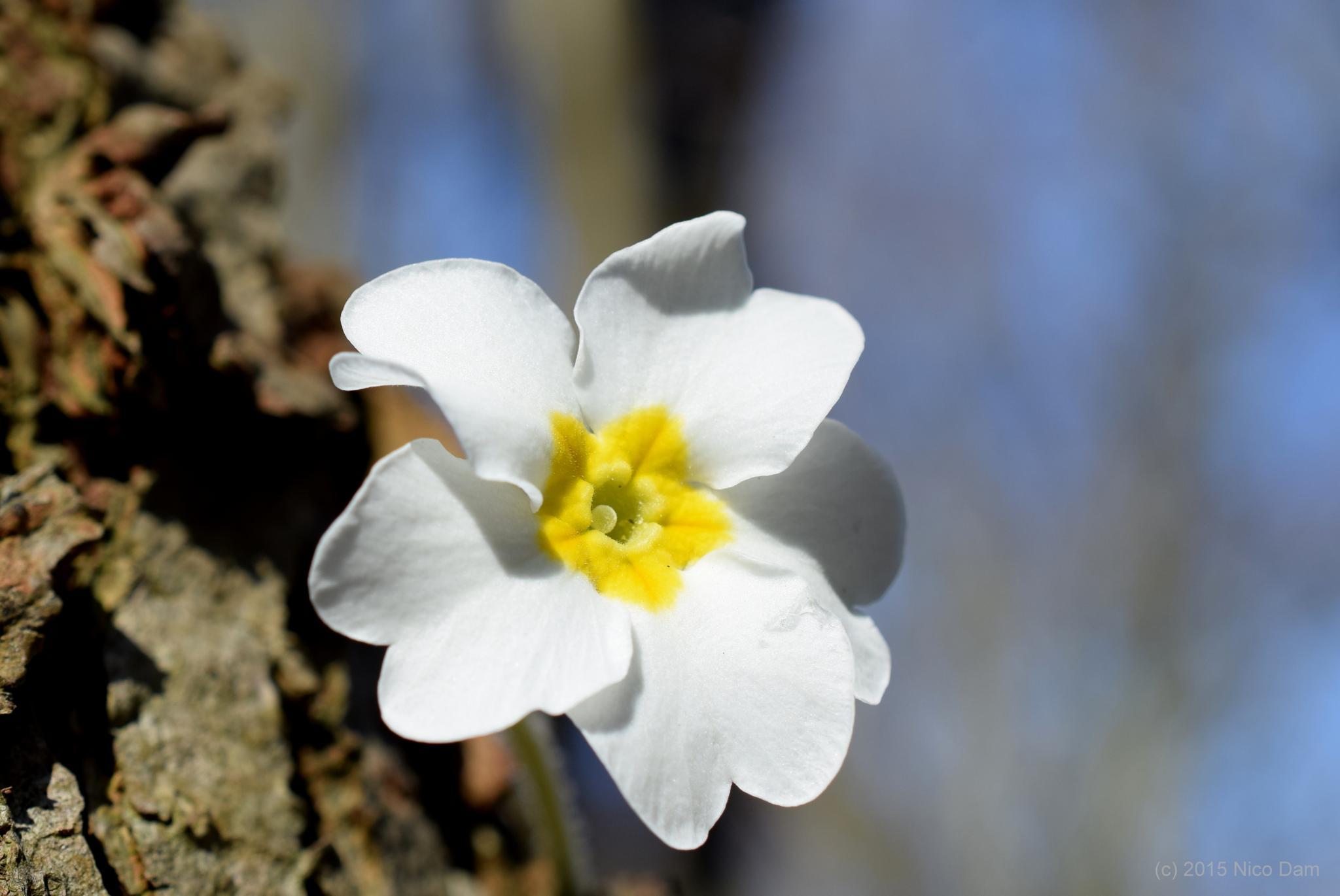 spring by Nico Dam