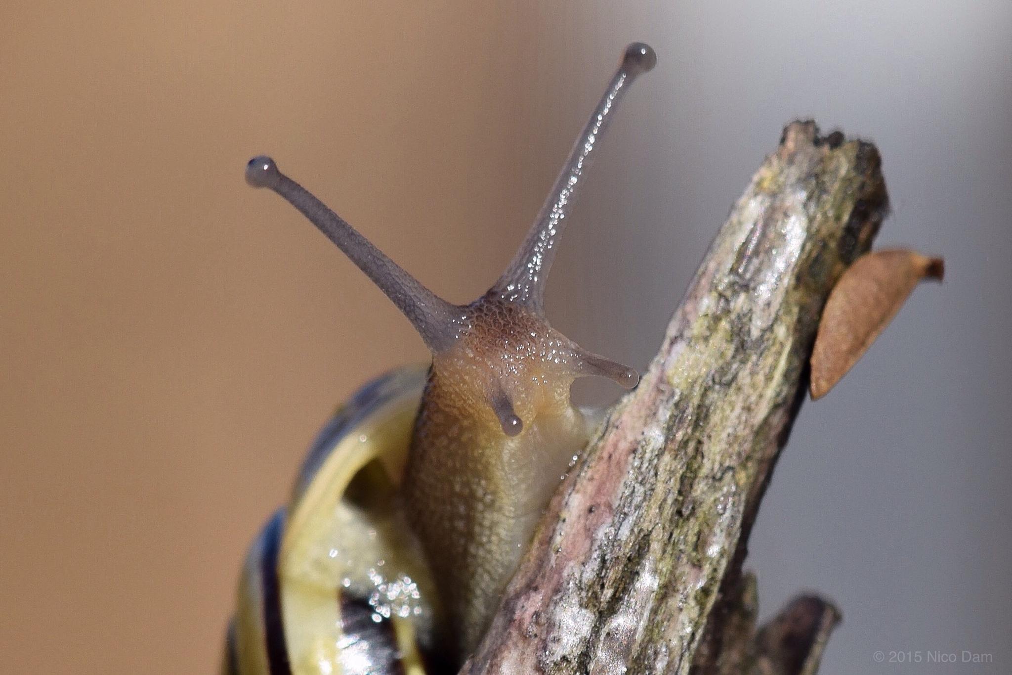 Photo in Macro #snail #nature #macro