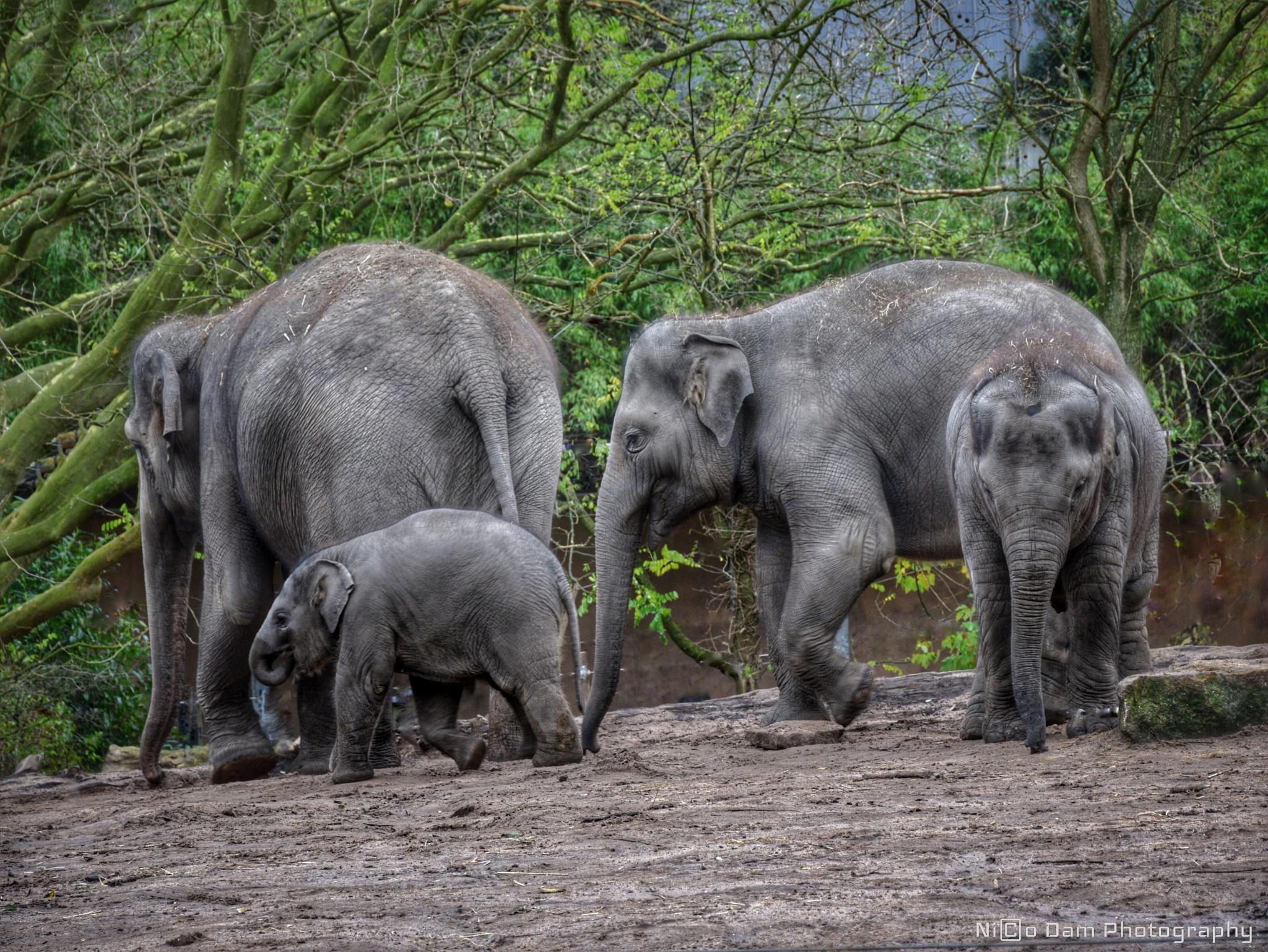 family gathering by Nico Dam
