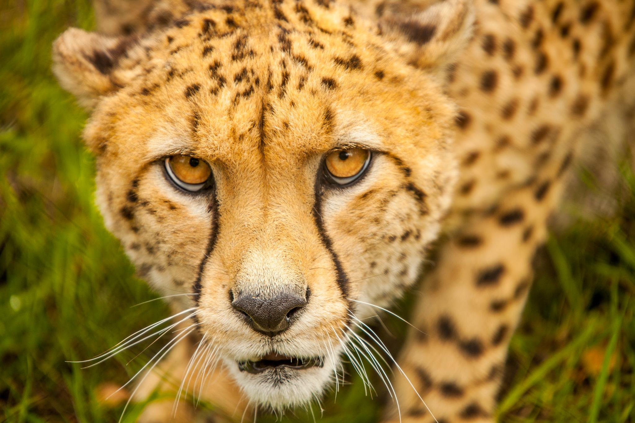 Hungry Eyes by Russ Summers