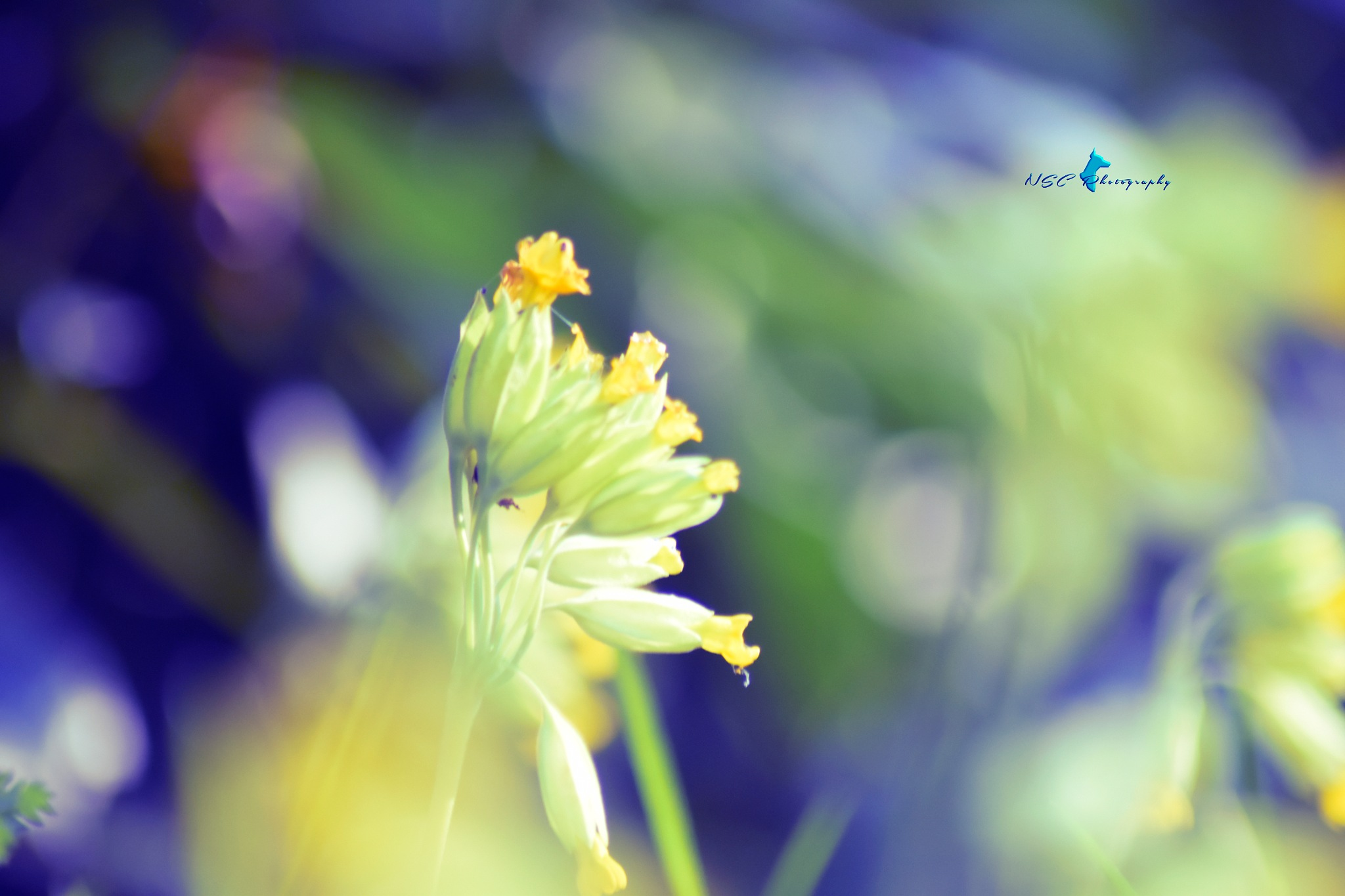 ➖ Nature & Beauty & Flowers ➖ by NSC Photography