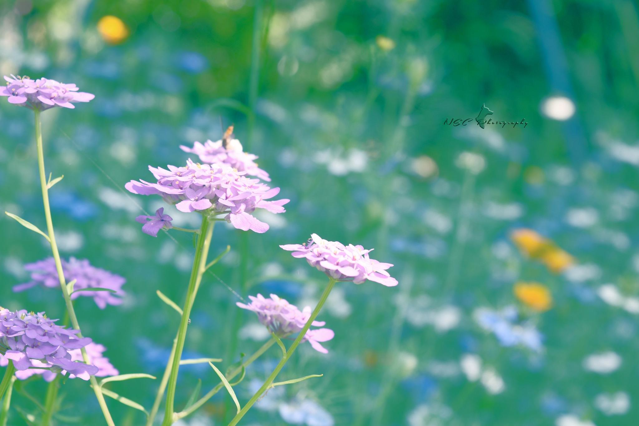 évasion florale by NSC Photography