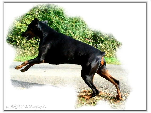 ♠ My Lovely Girl Chiswick ♥ by NSC Photography