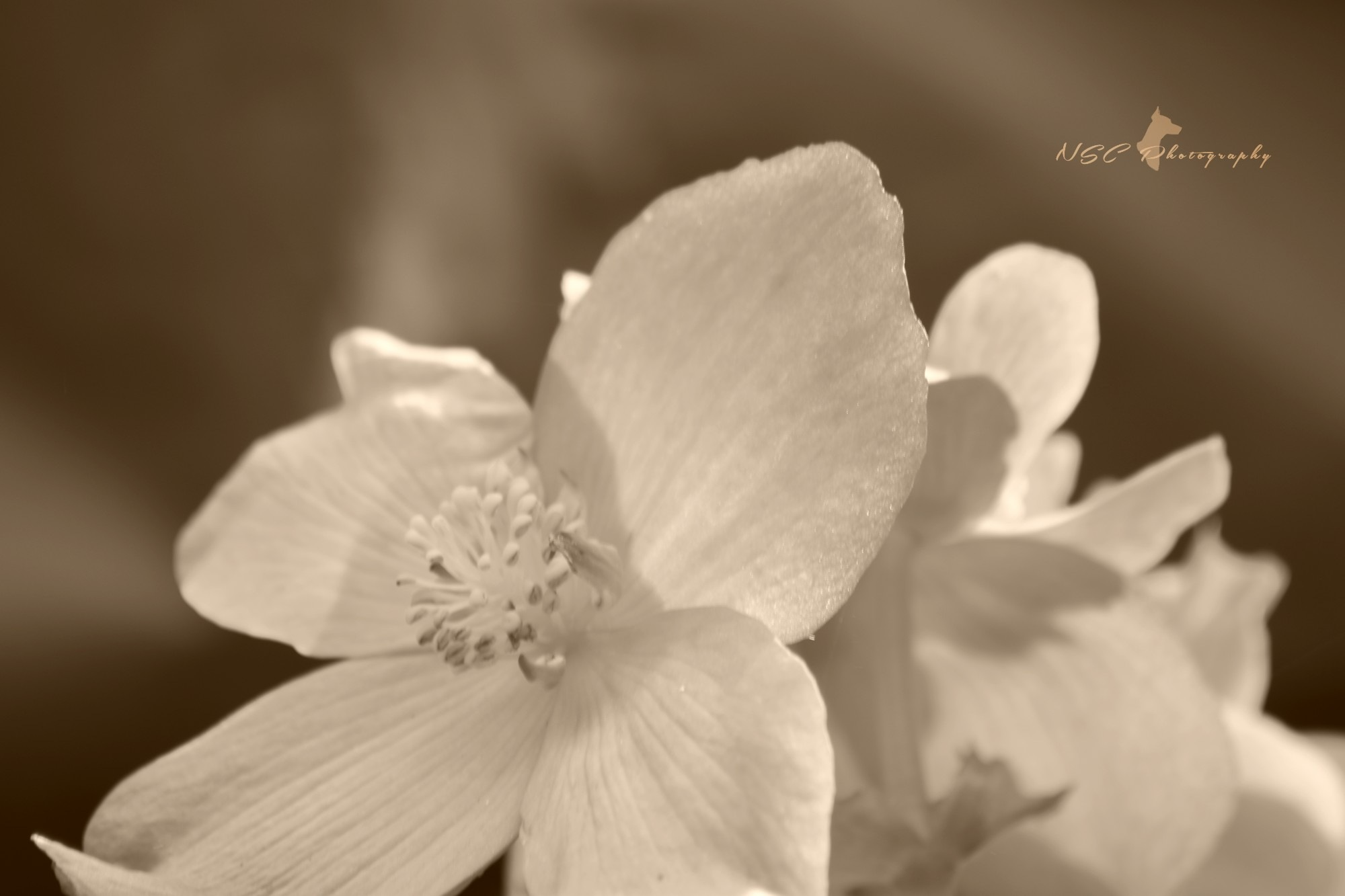 Flower in monochromy by NSC Photography