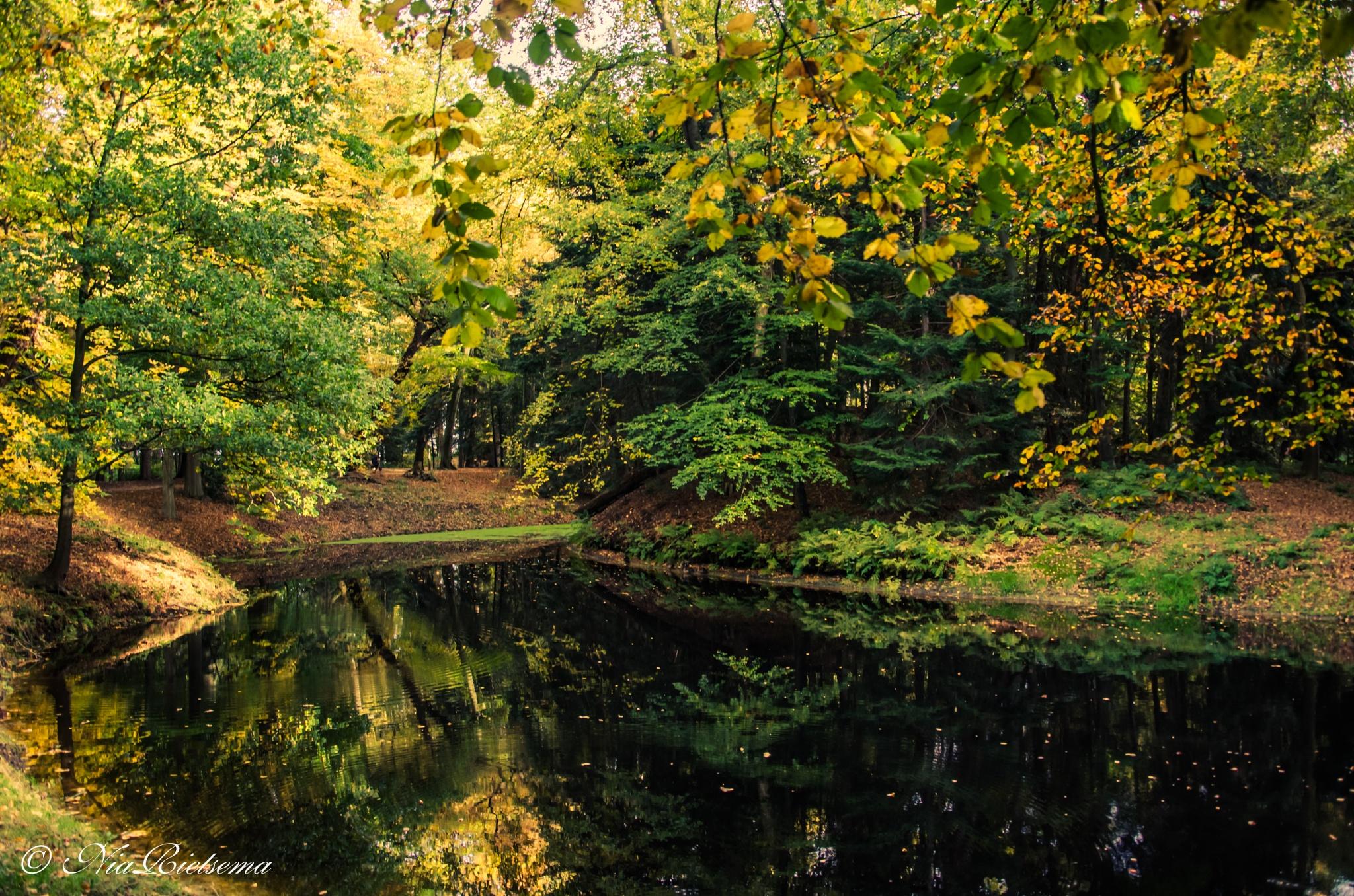 In het bos... by NiaR