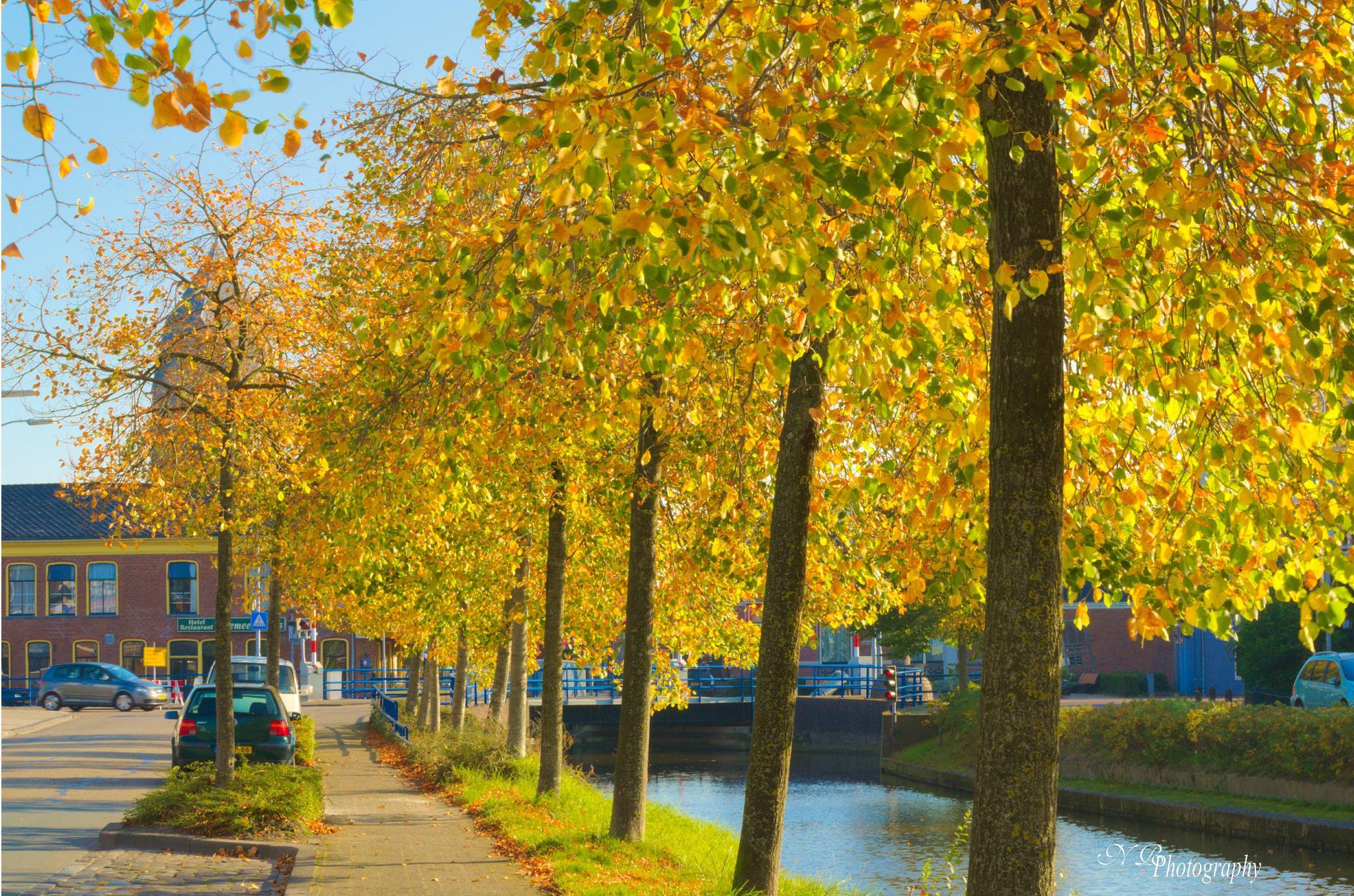 Mooie gele bladeren... by NiaR