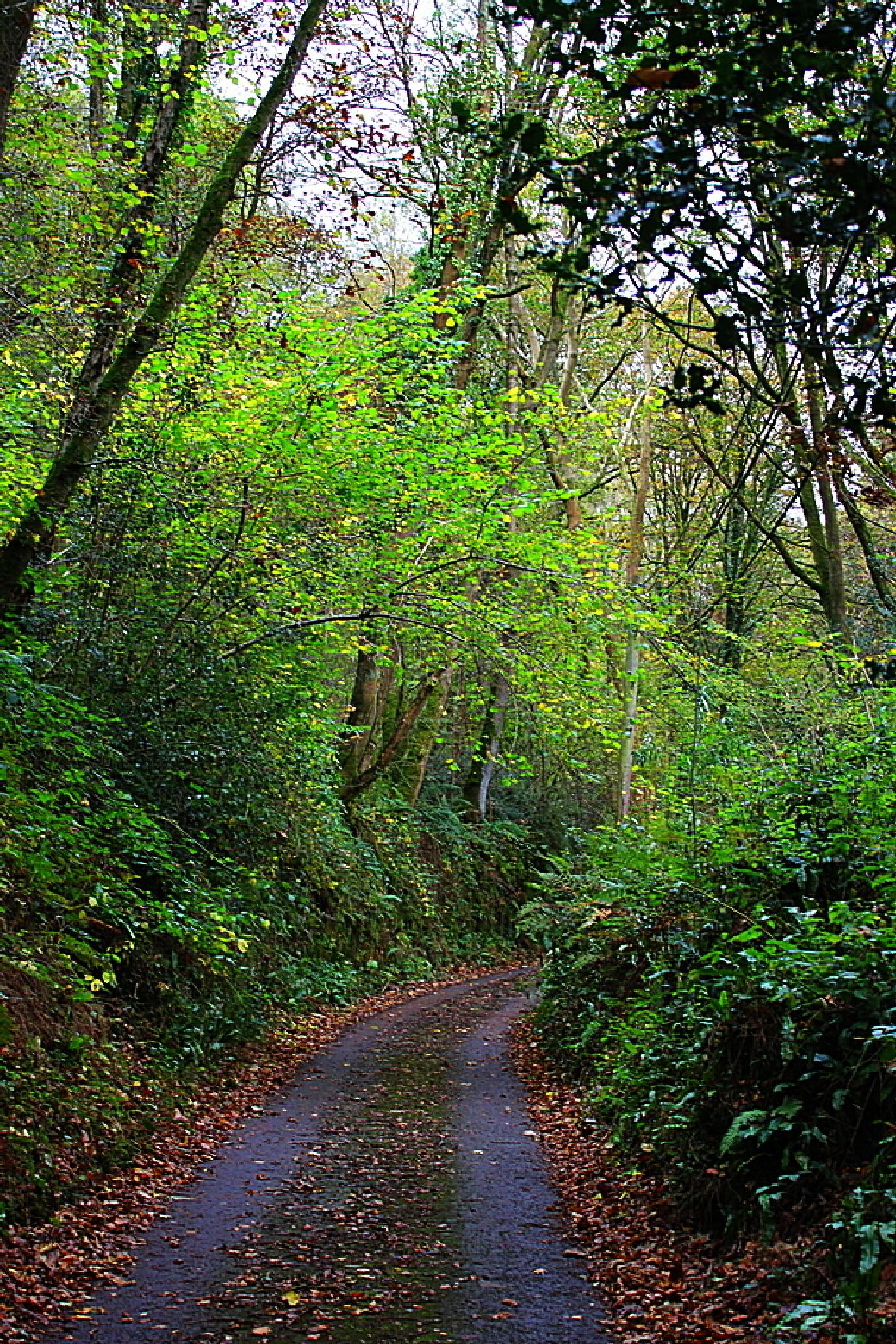 Monmouthshire lane by ralph.cook2