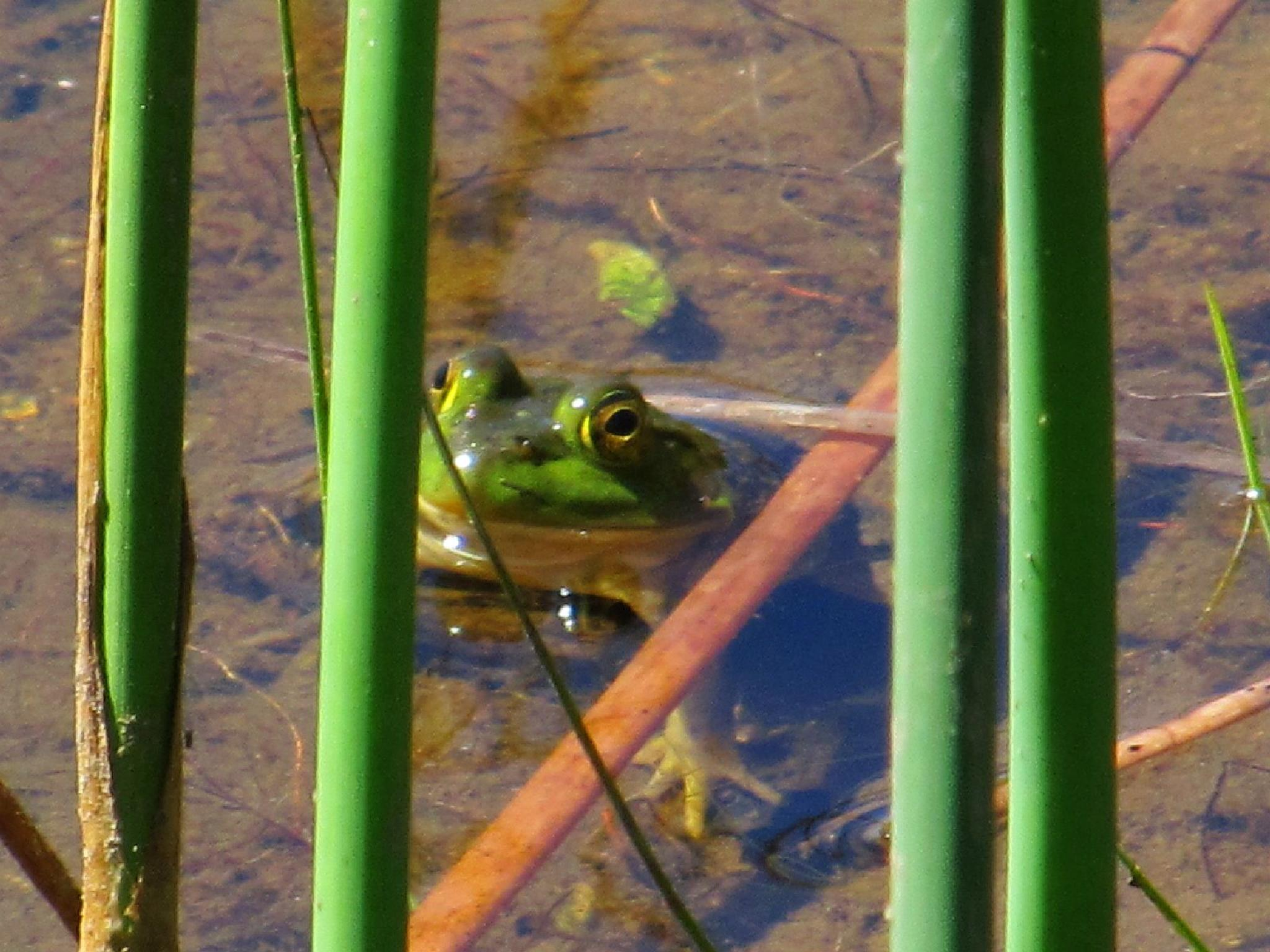 Froggy by Ruth Moore