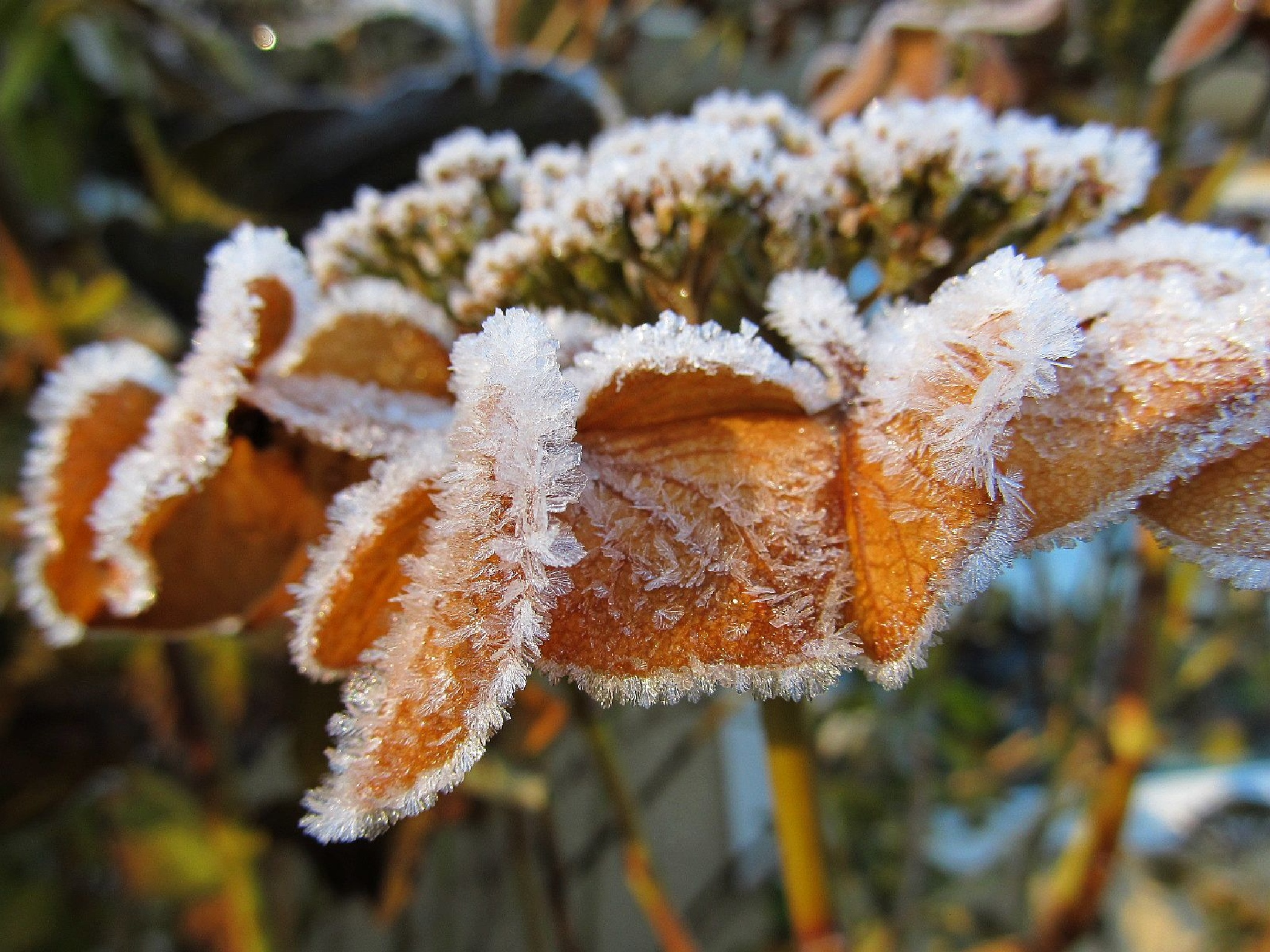 Morning Frost #1 by Ruth Moore