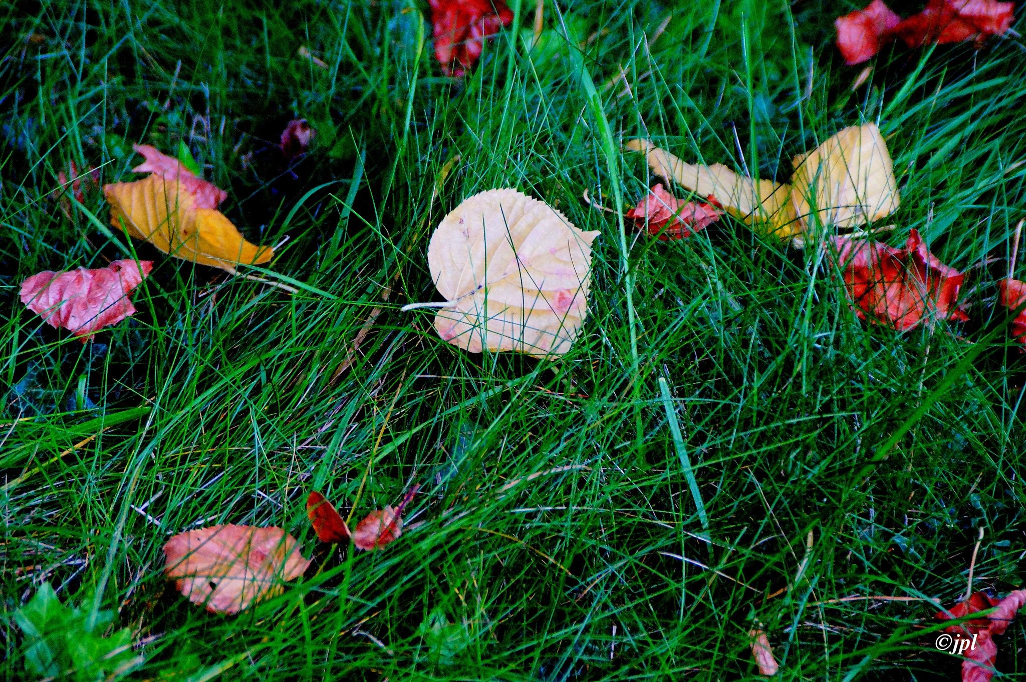 Germes d'automne by jplognoul
