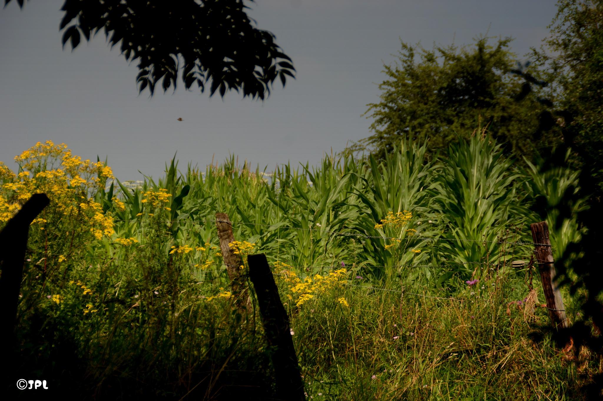 Nature riche by jplognoul