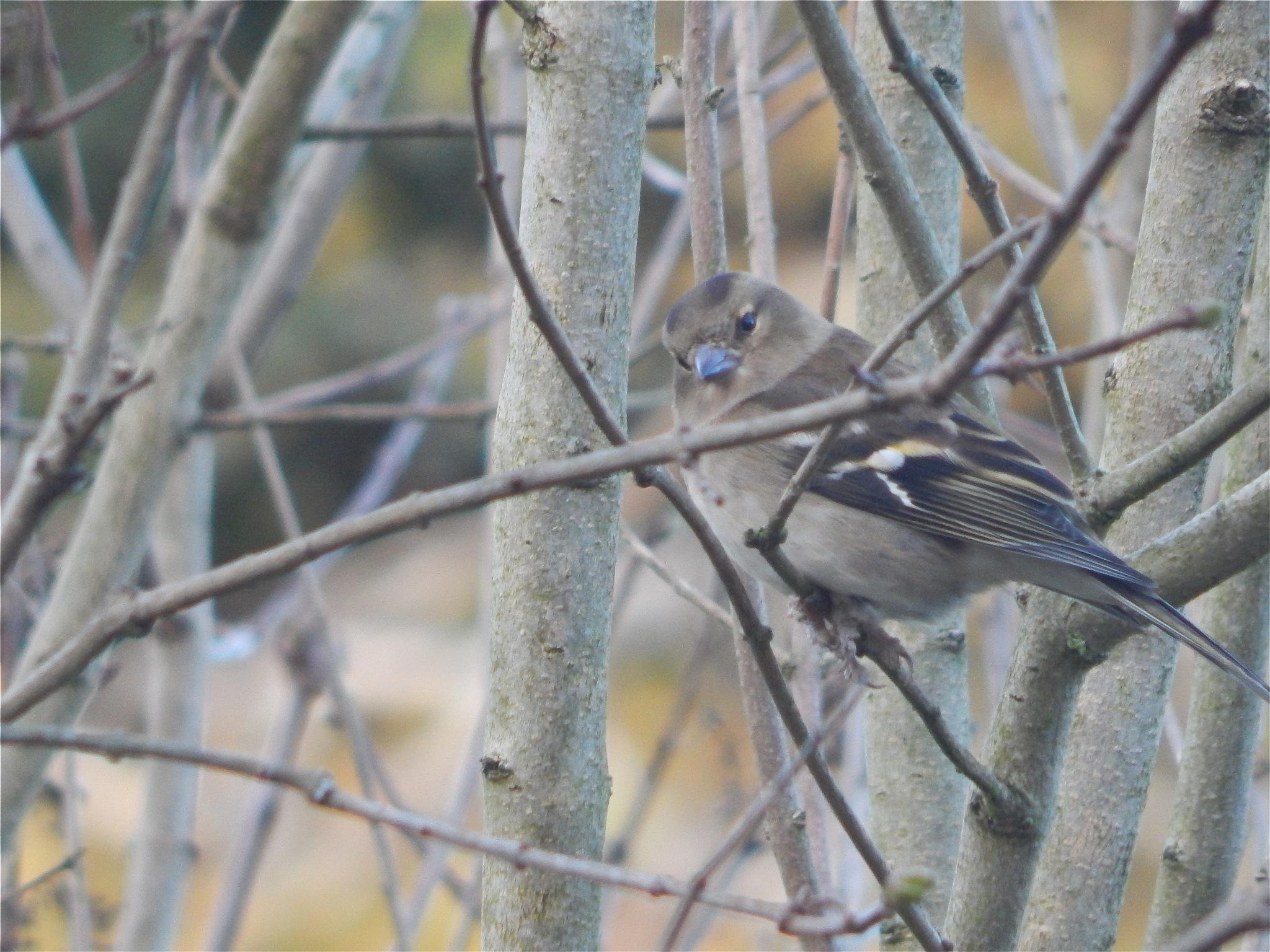 bird 1/20 by nikita.buckley.9