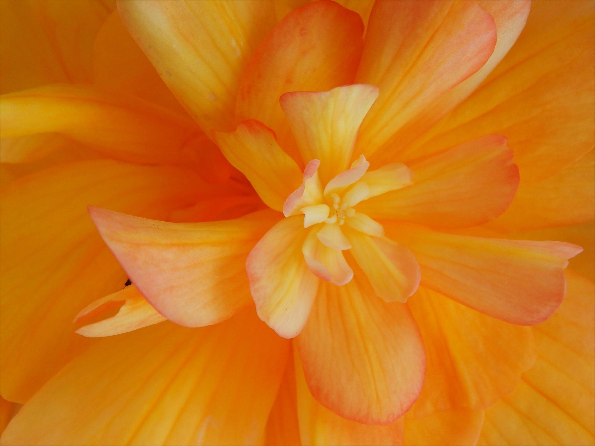 FRUIT SALAD COLOURED FLOWER by nikita.buckley.9