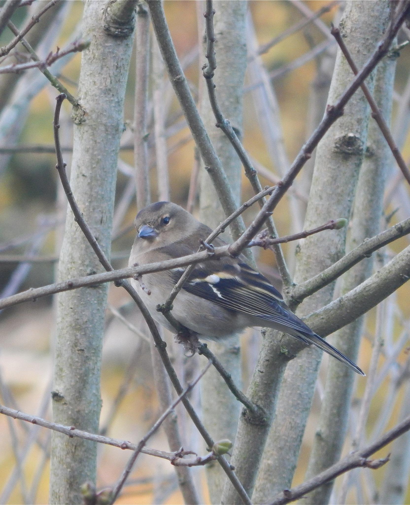 bird 3/20 by nikita.buckley.9