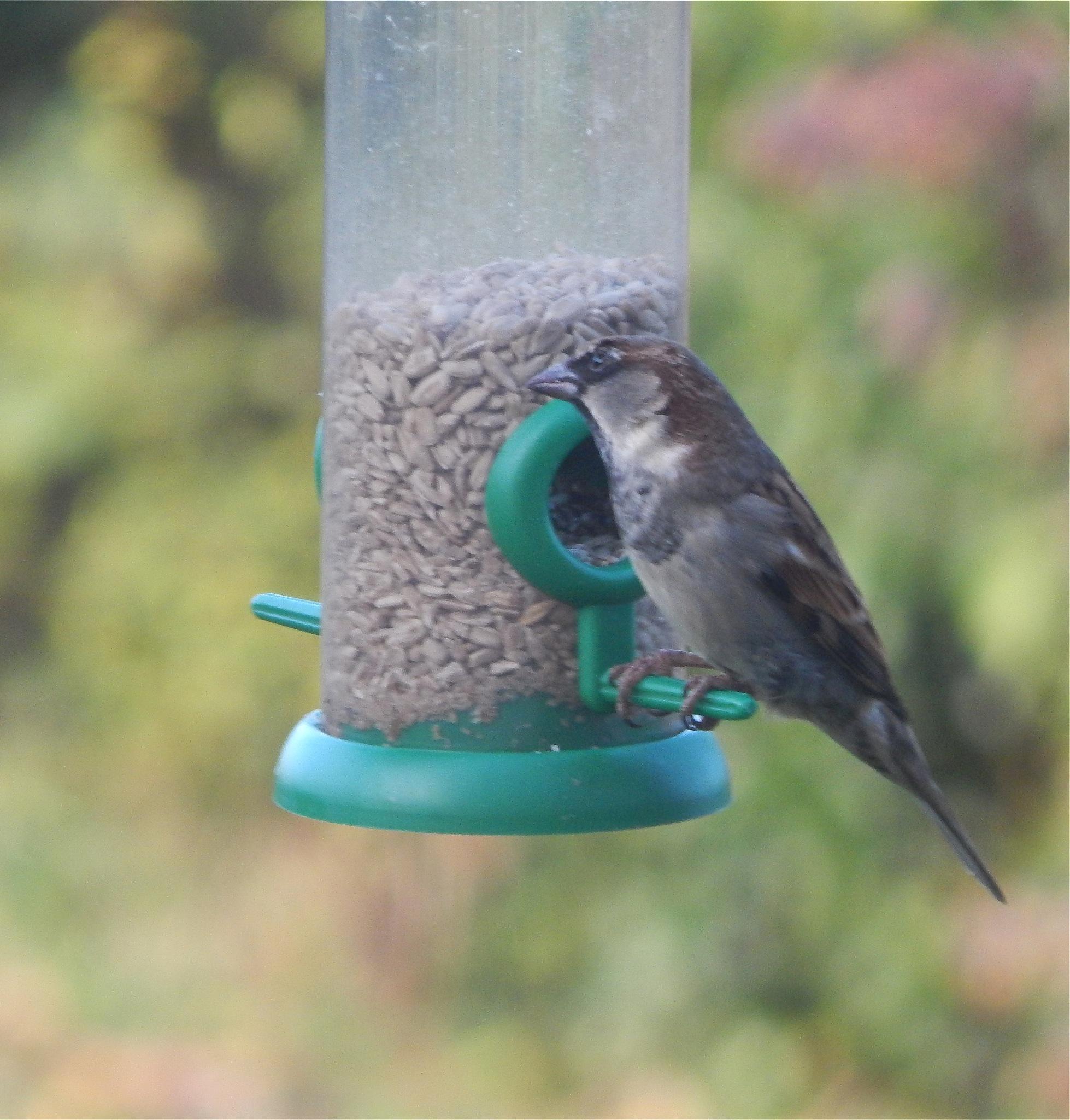 bird 6/20 by nikita.buckley.9