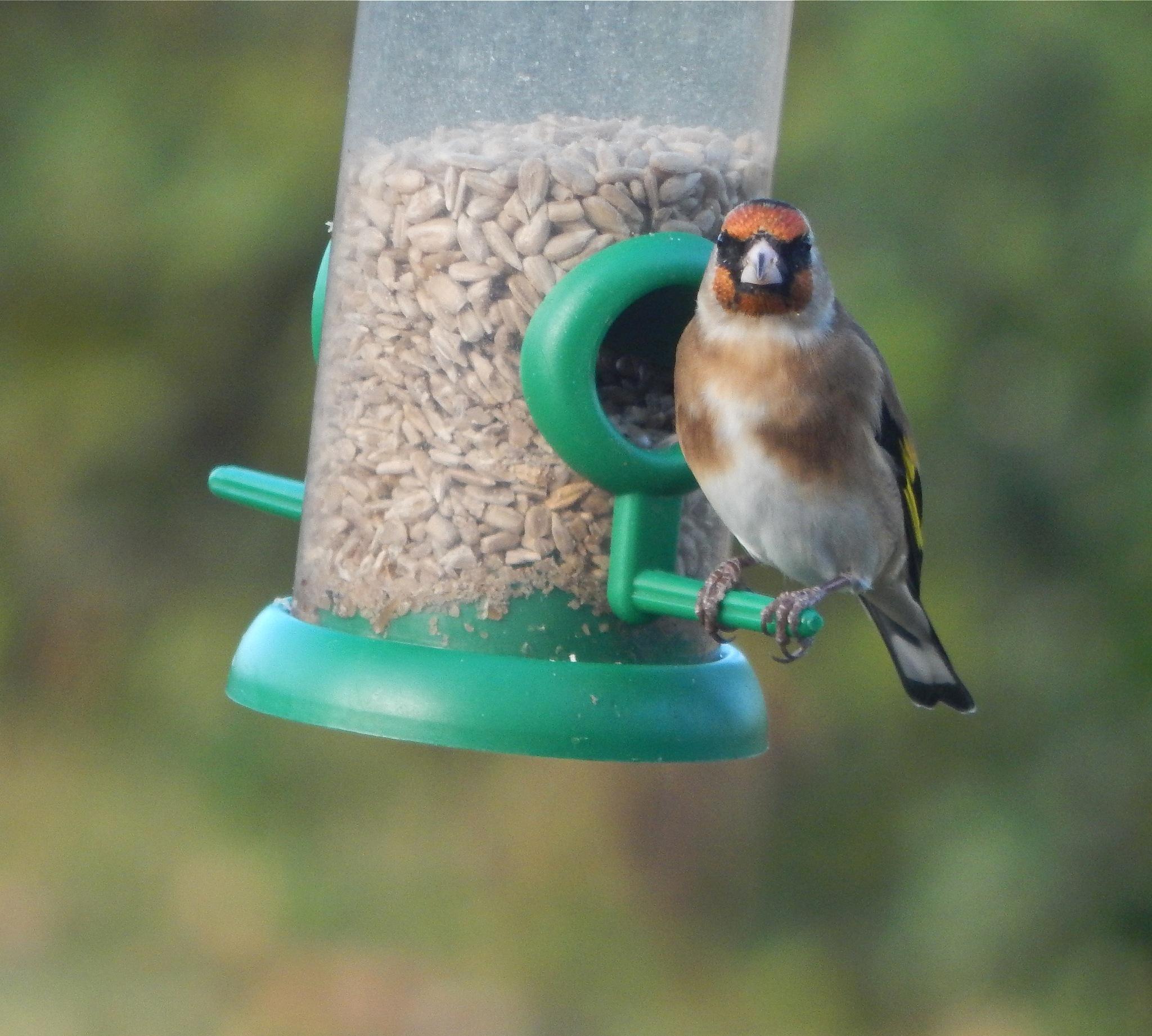 bird 17/20 by nikita.buckley.9