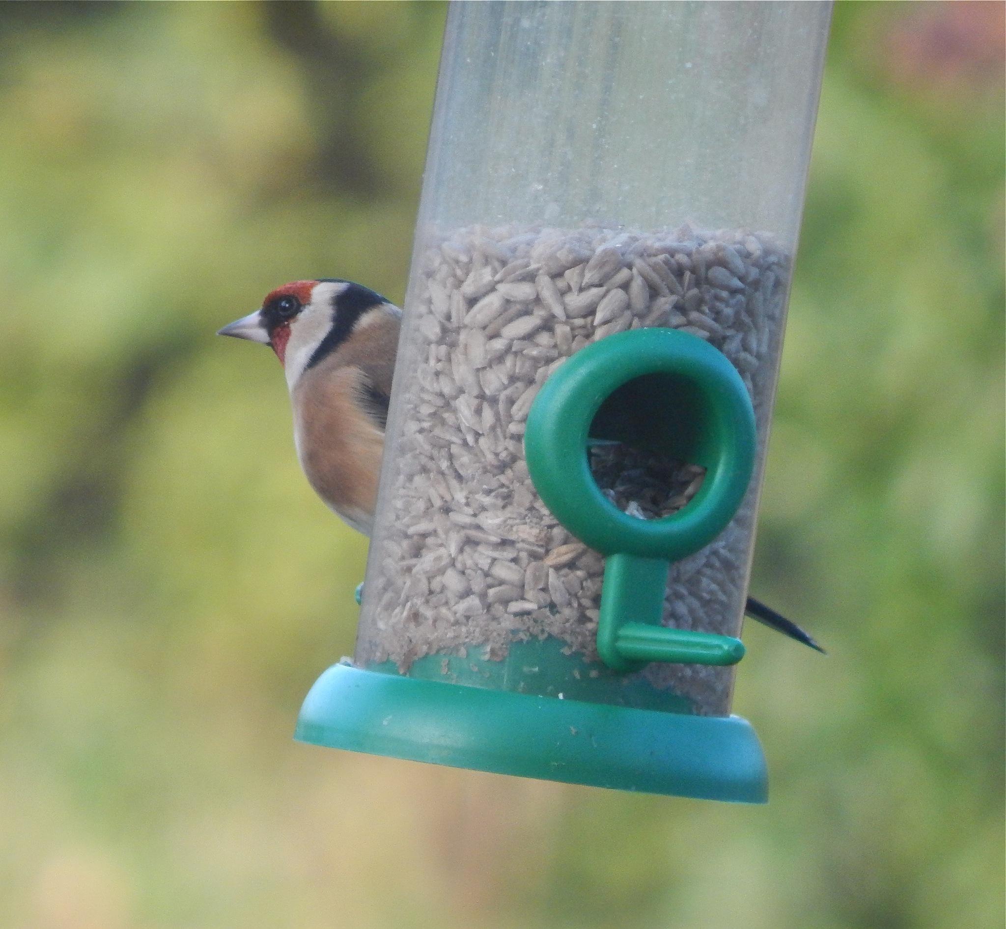 bird 7/20 by nikita.buckley.9