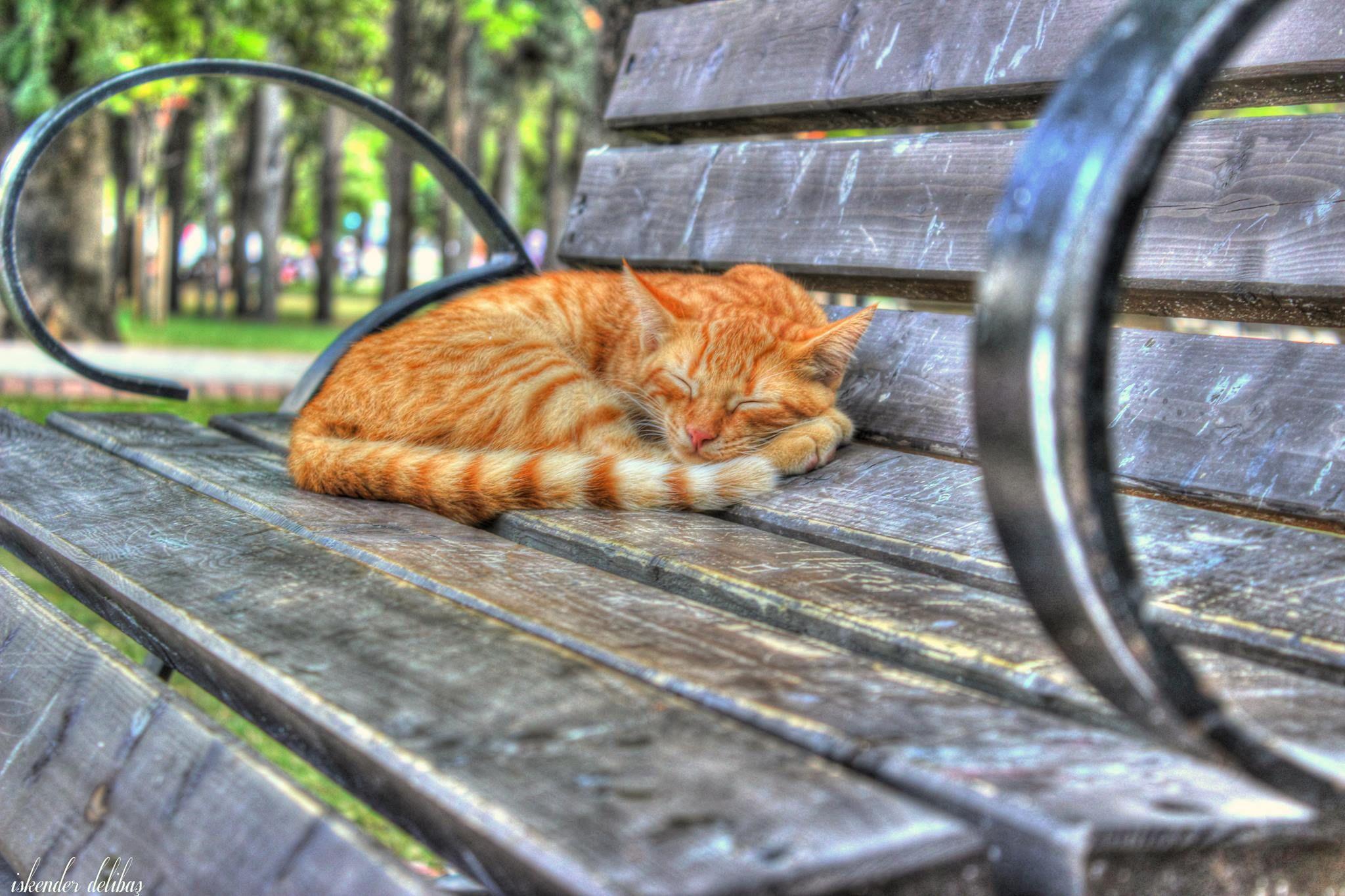 şşş to sleep :) by iskenderdelibas