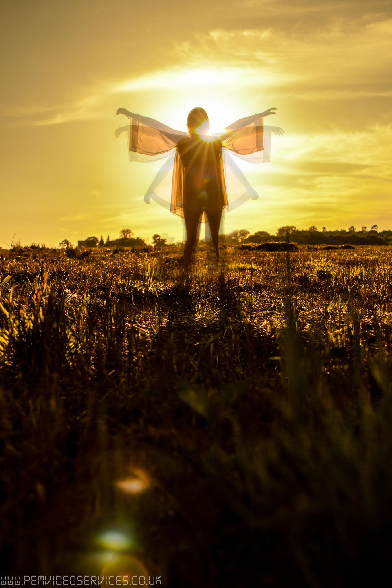 Wings on Sunlight by paul.ekert