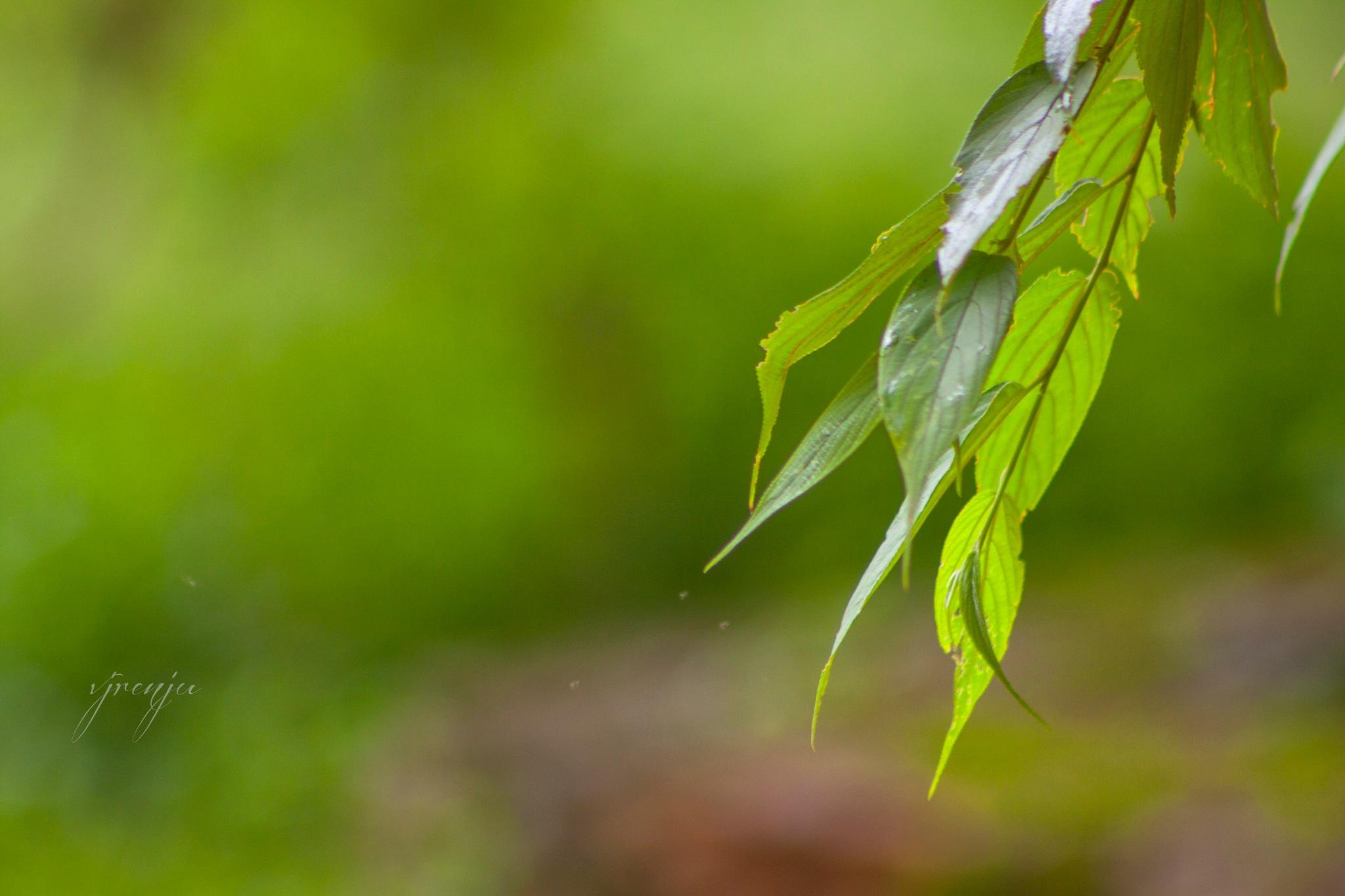 fallen leaves by VJ Renju