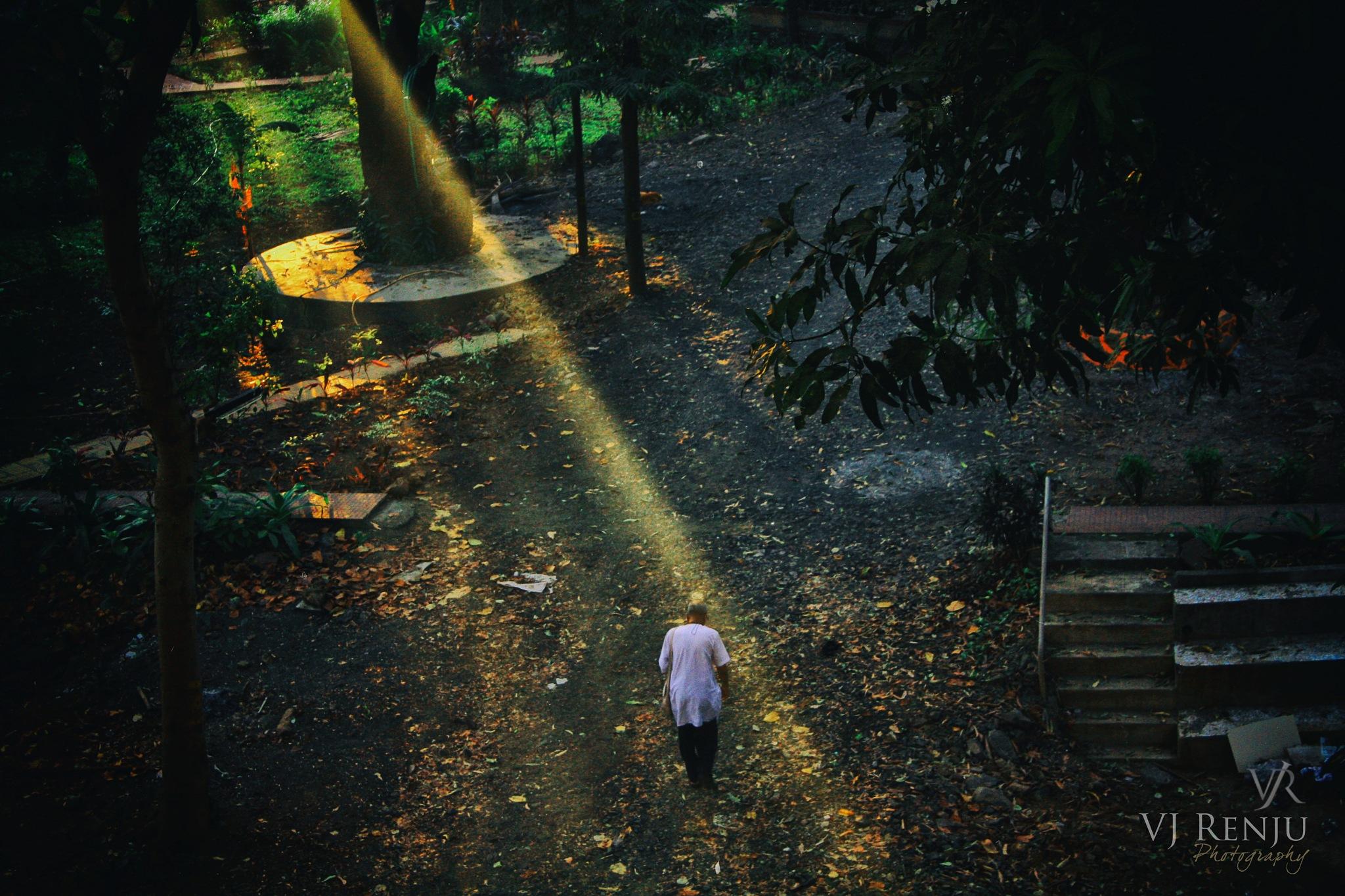 Morning rays by VJ Renju