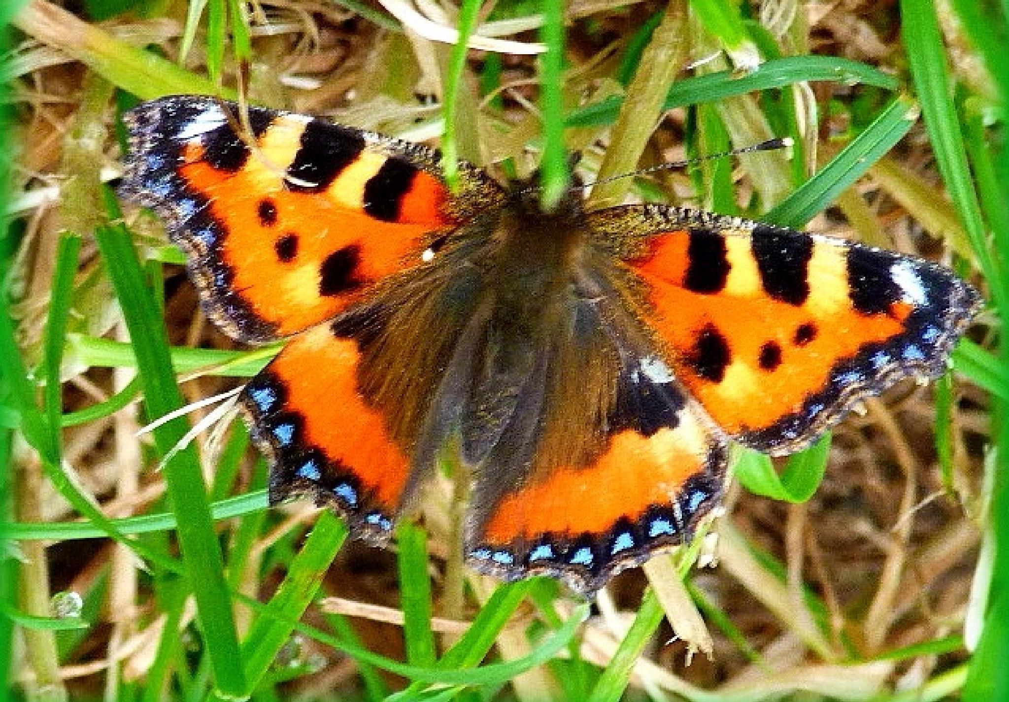 Photo in Random #butterflies #nature #wildlife #colour