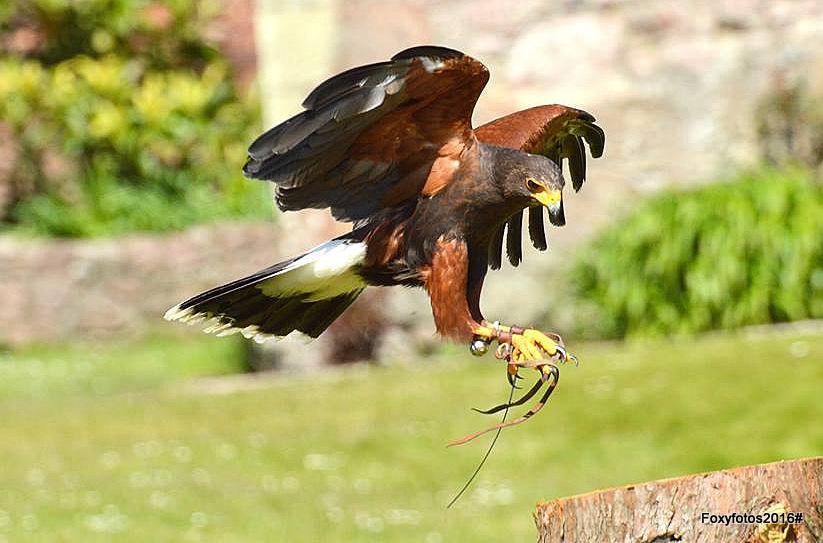 Kite landing  by David.s.fox.9