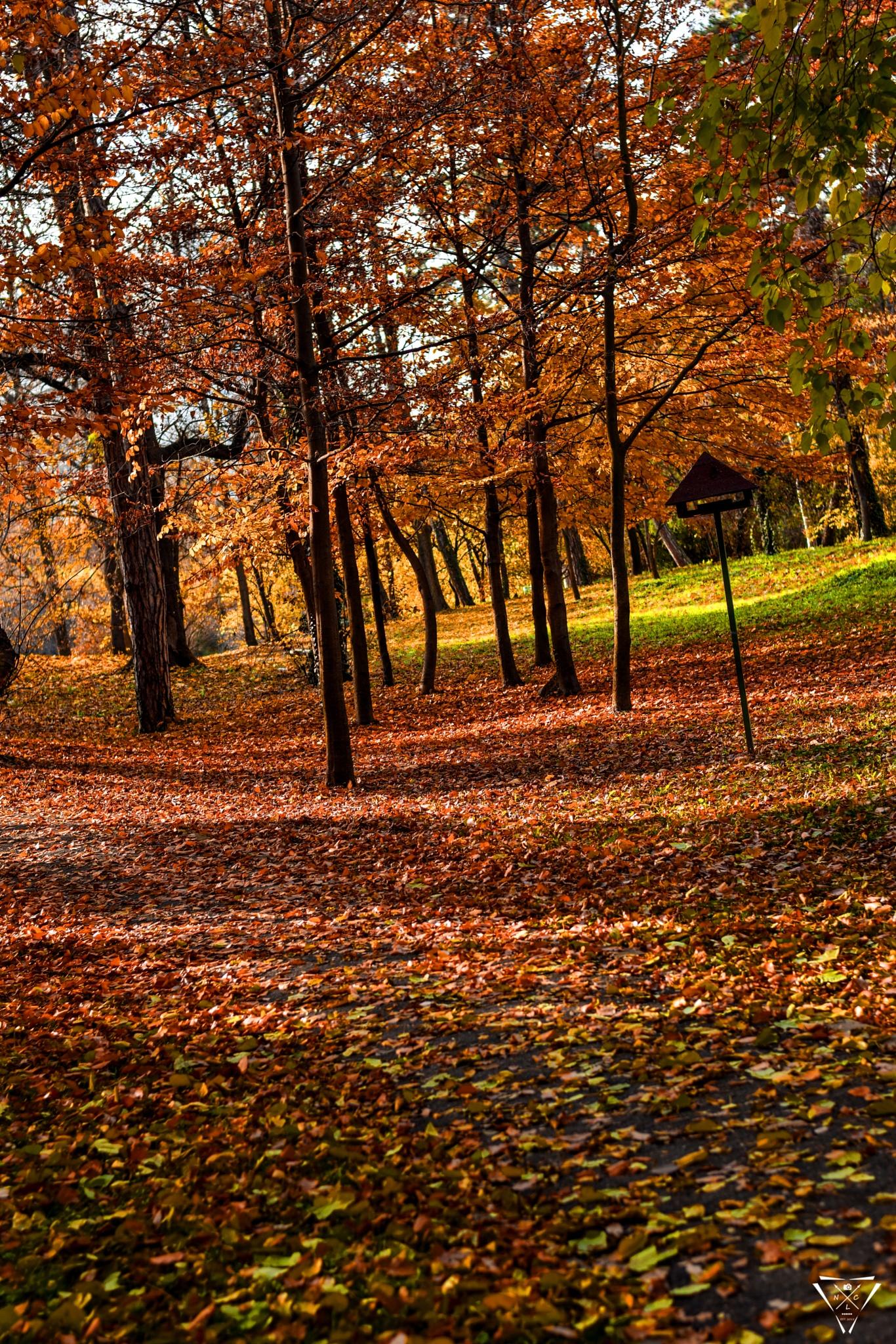 Auttumn park by NLC Artwork