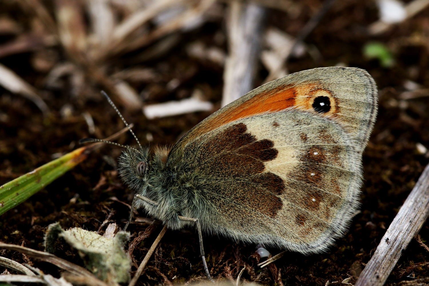 Small Heath - a bit closer!! by geoff.hall.12
