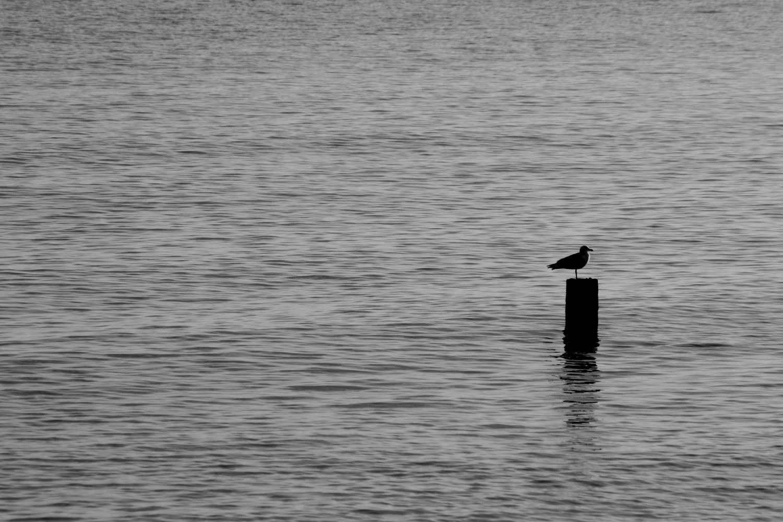 Gull by geoff.hall.12