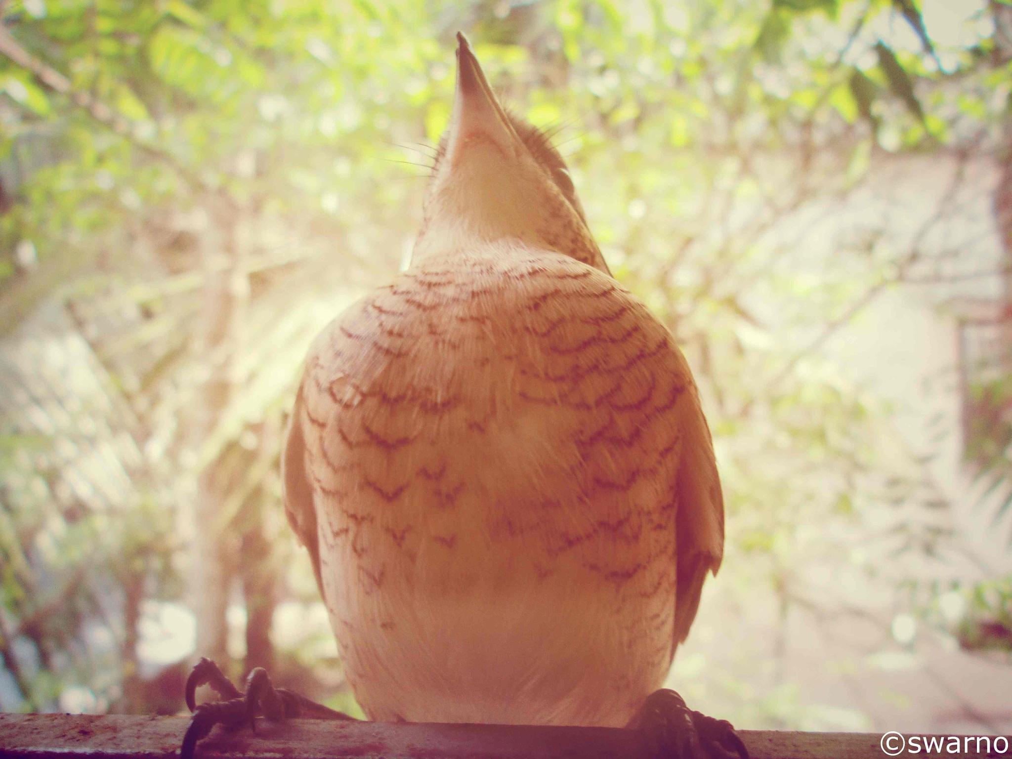 bird by swarnendu chatterjee