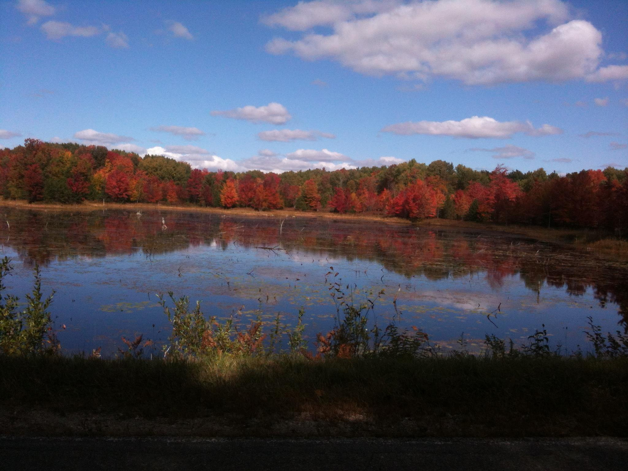 The Pond In Autumn  by Miguel Brennan
