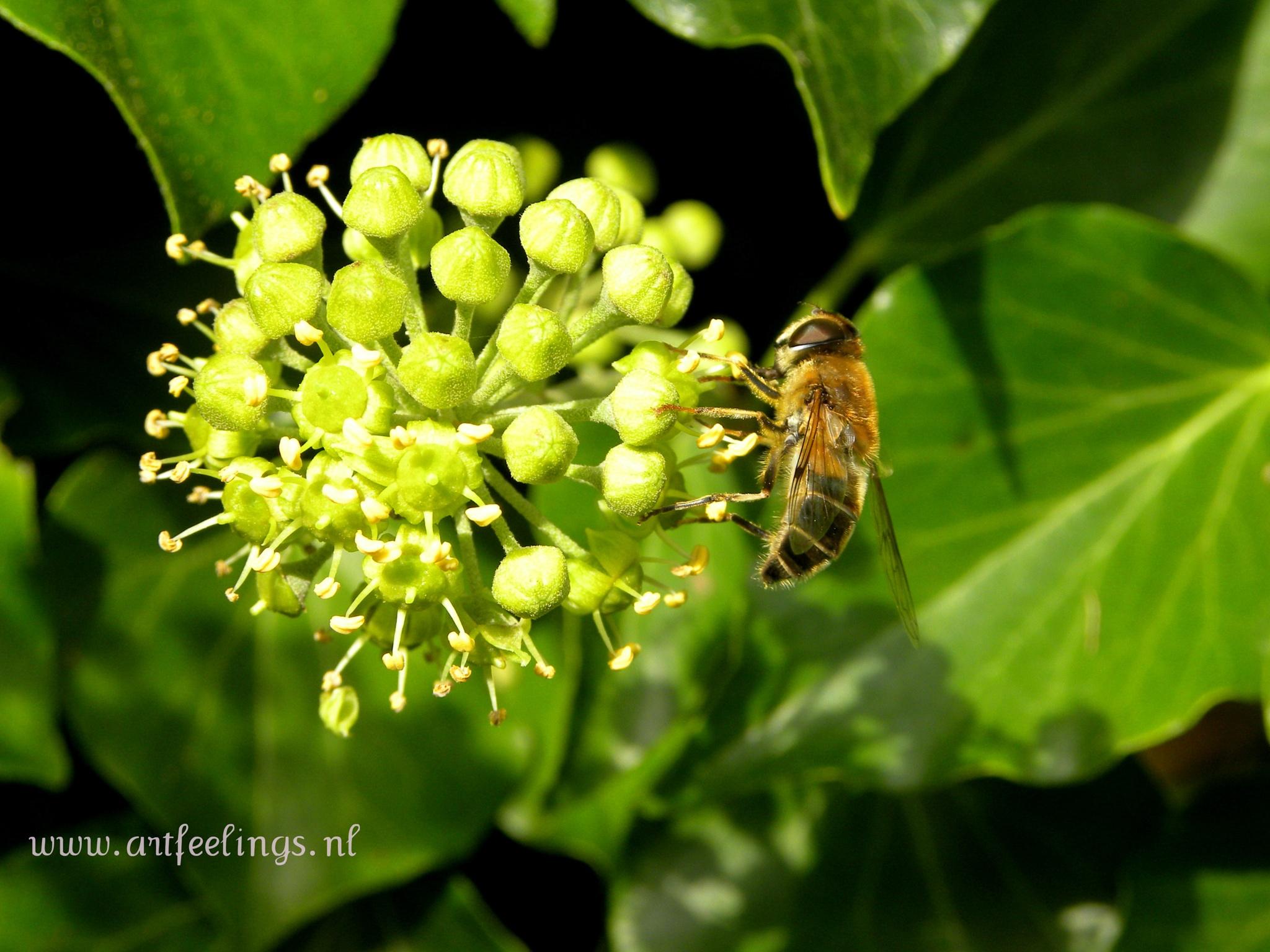 Bee by joke.rietveld