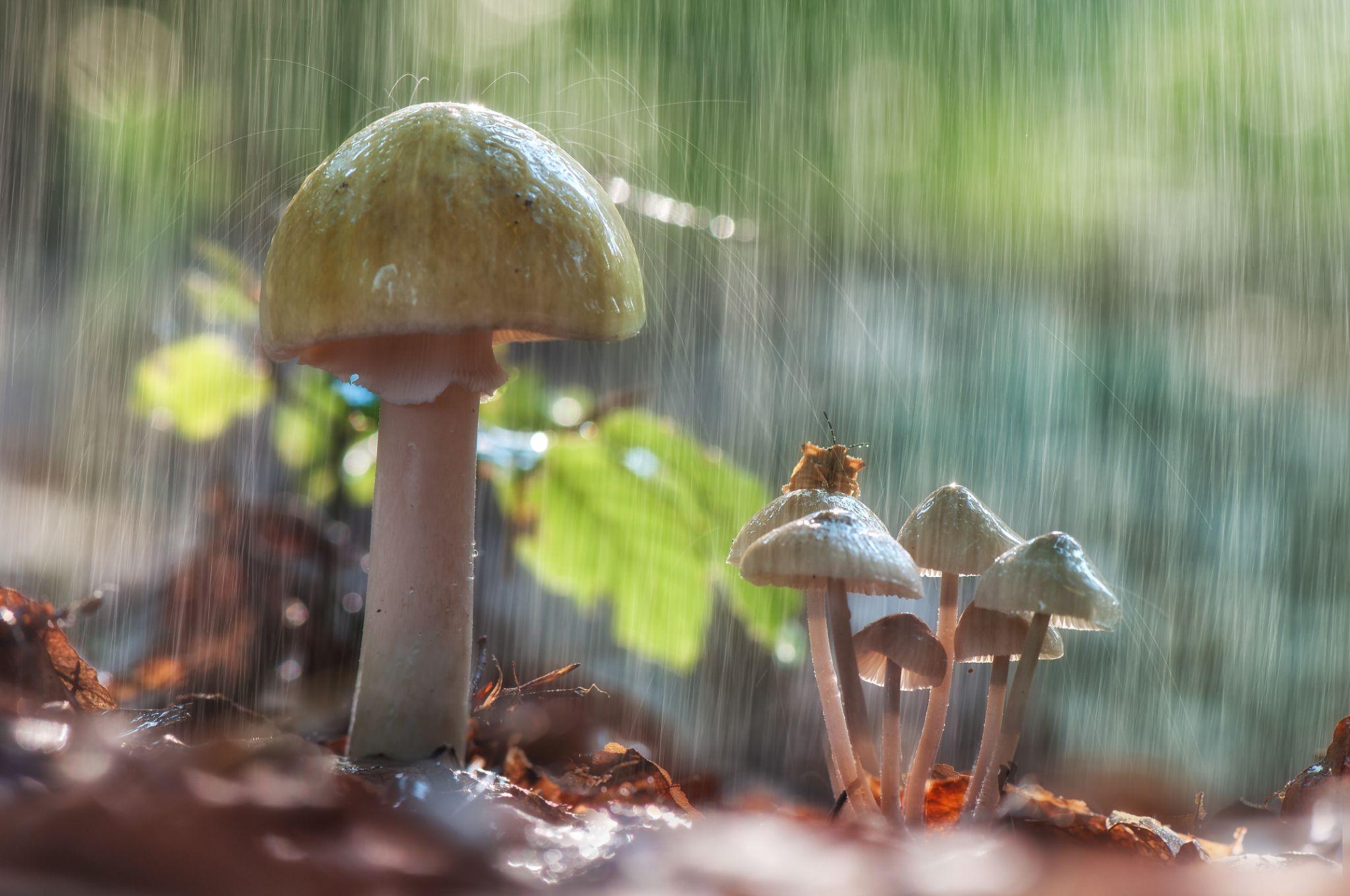 Shower Mushroom by Wolfgang Korazija