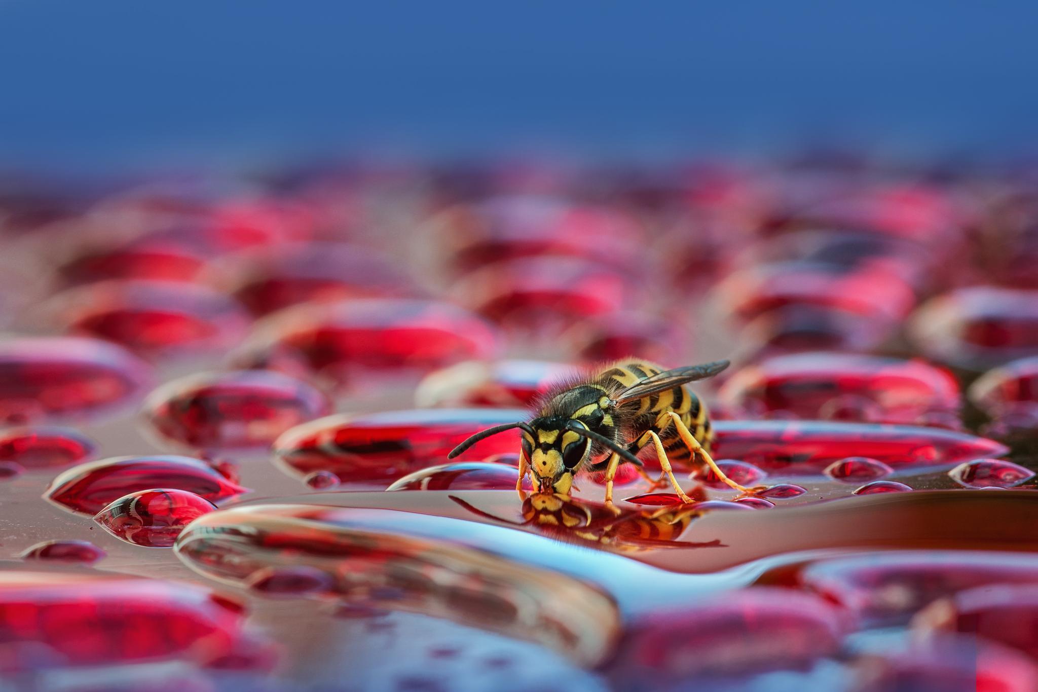 A sea of drops by Wolfgang Korazija