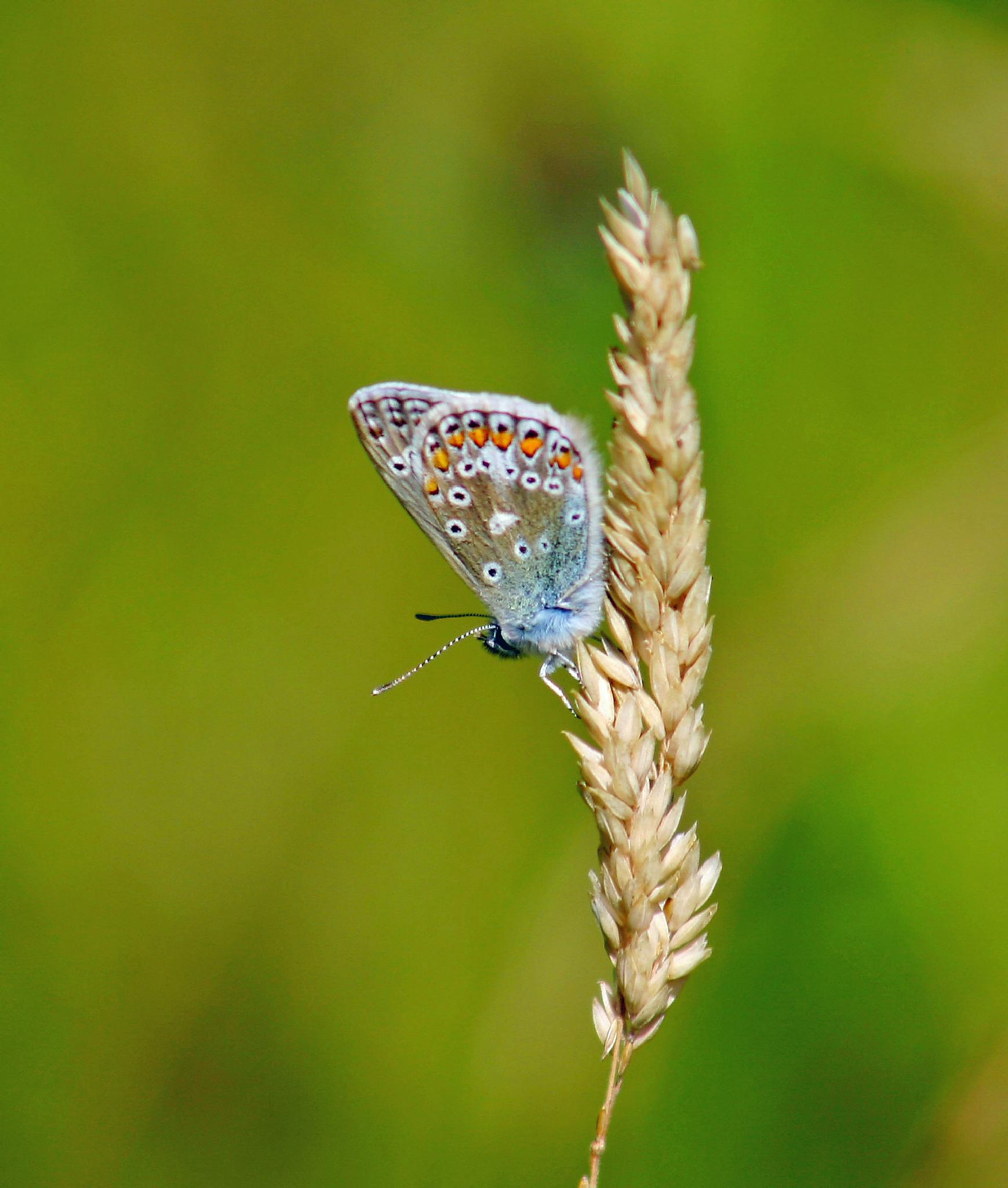 Small Blue by Craig Williams Photography