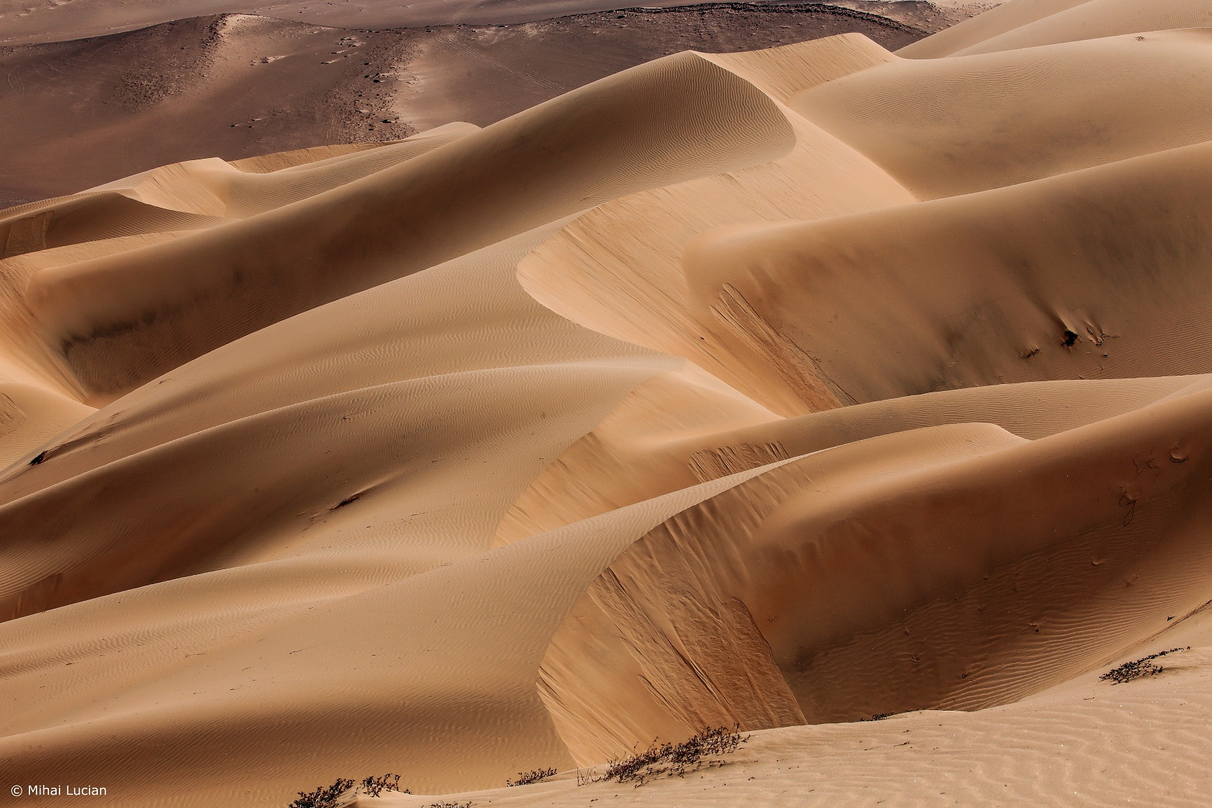 # lacy dunes by Mihai Lucian