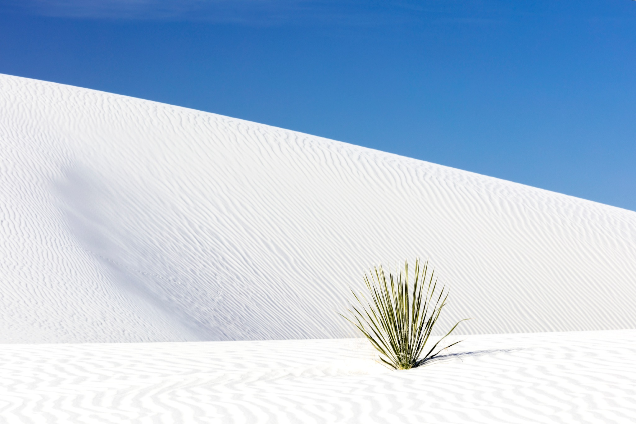 White Sands, Green Plant by Olie's Images