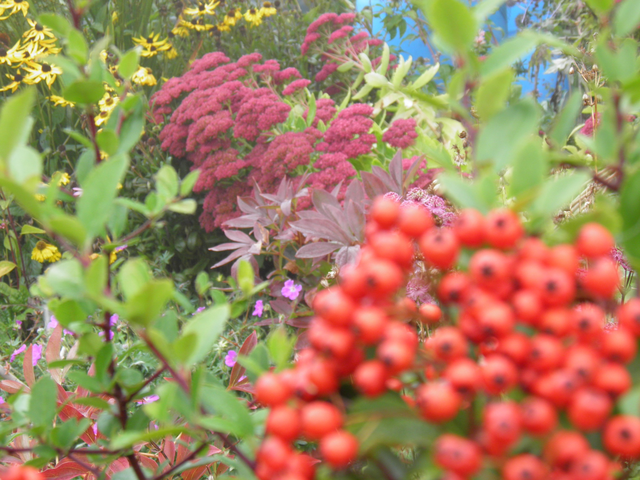 Autumn colours by wendysmithpatrick