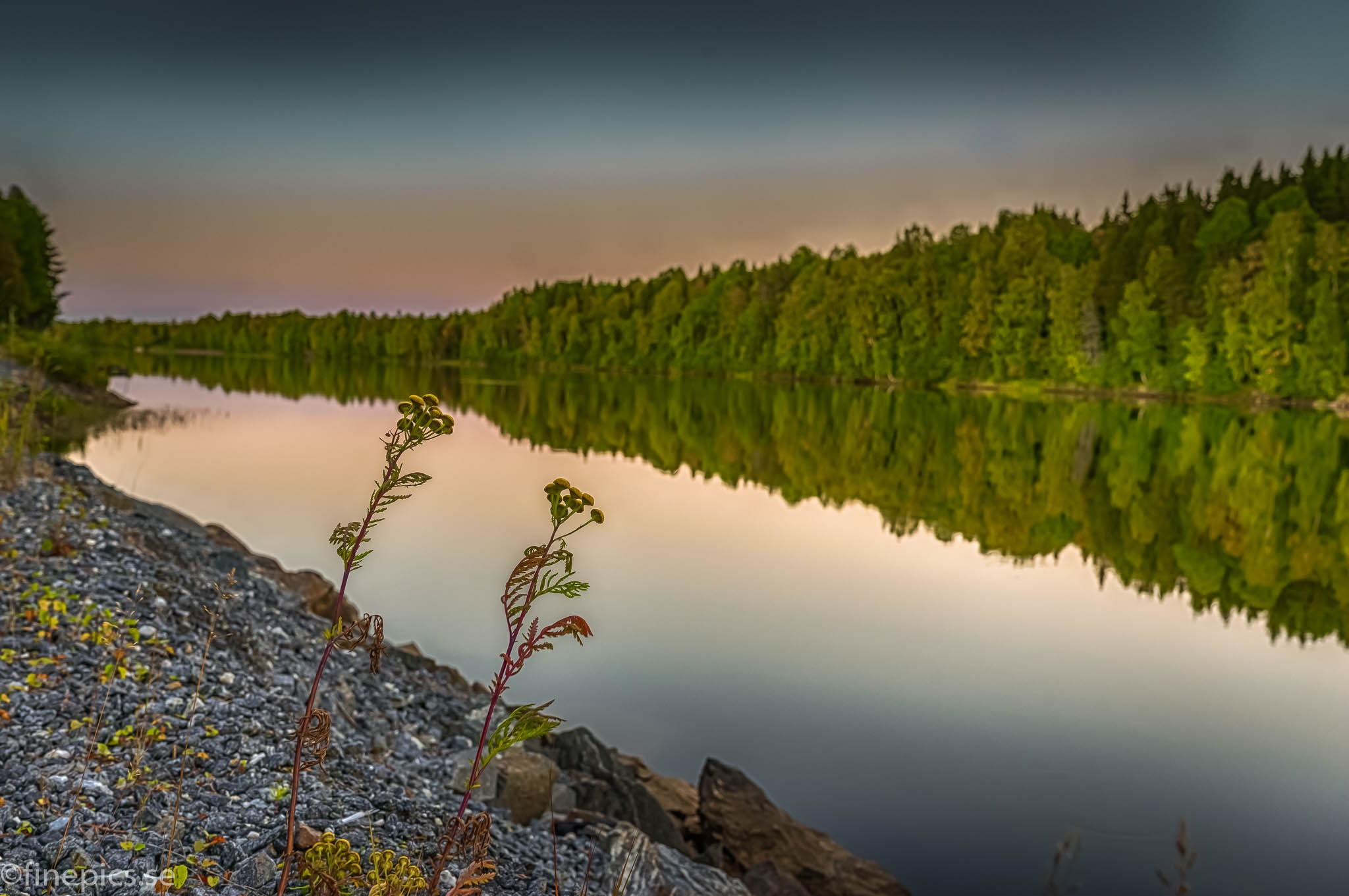 Weed at the edge of the river. by Johan Bergenstråhle