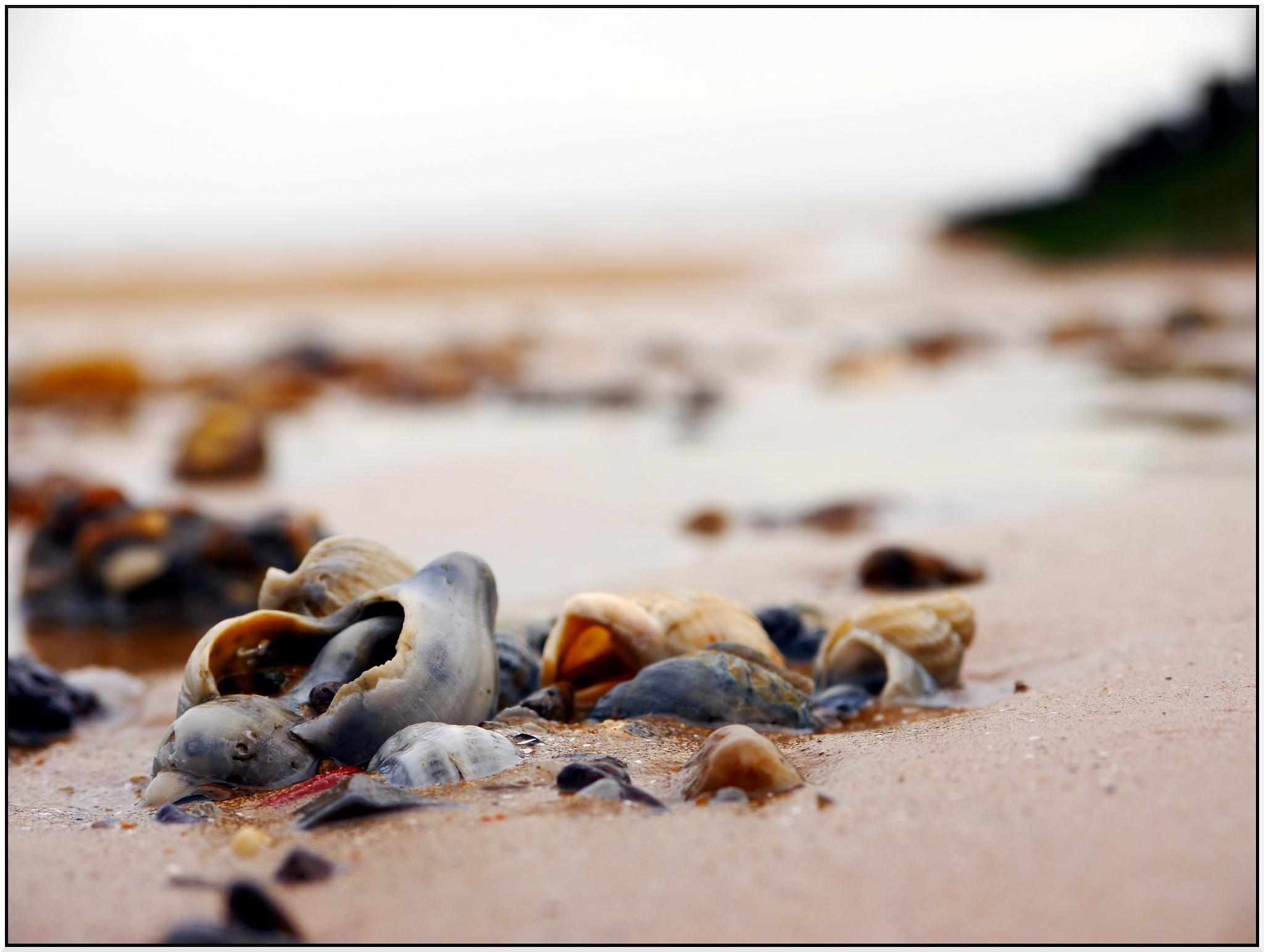 Shells by phillip.carey