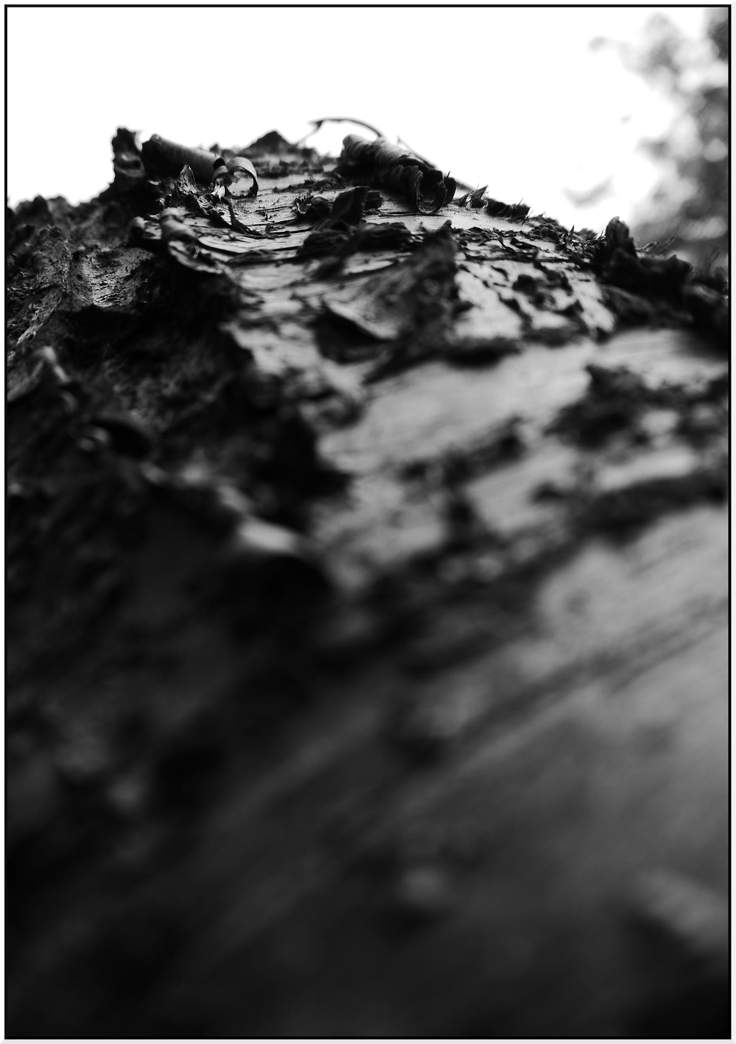 Tree Bark by phillip.carey