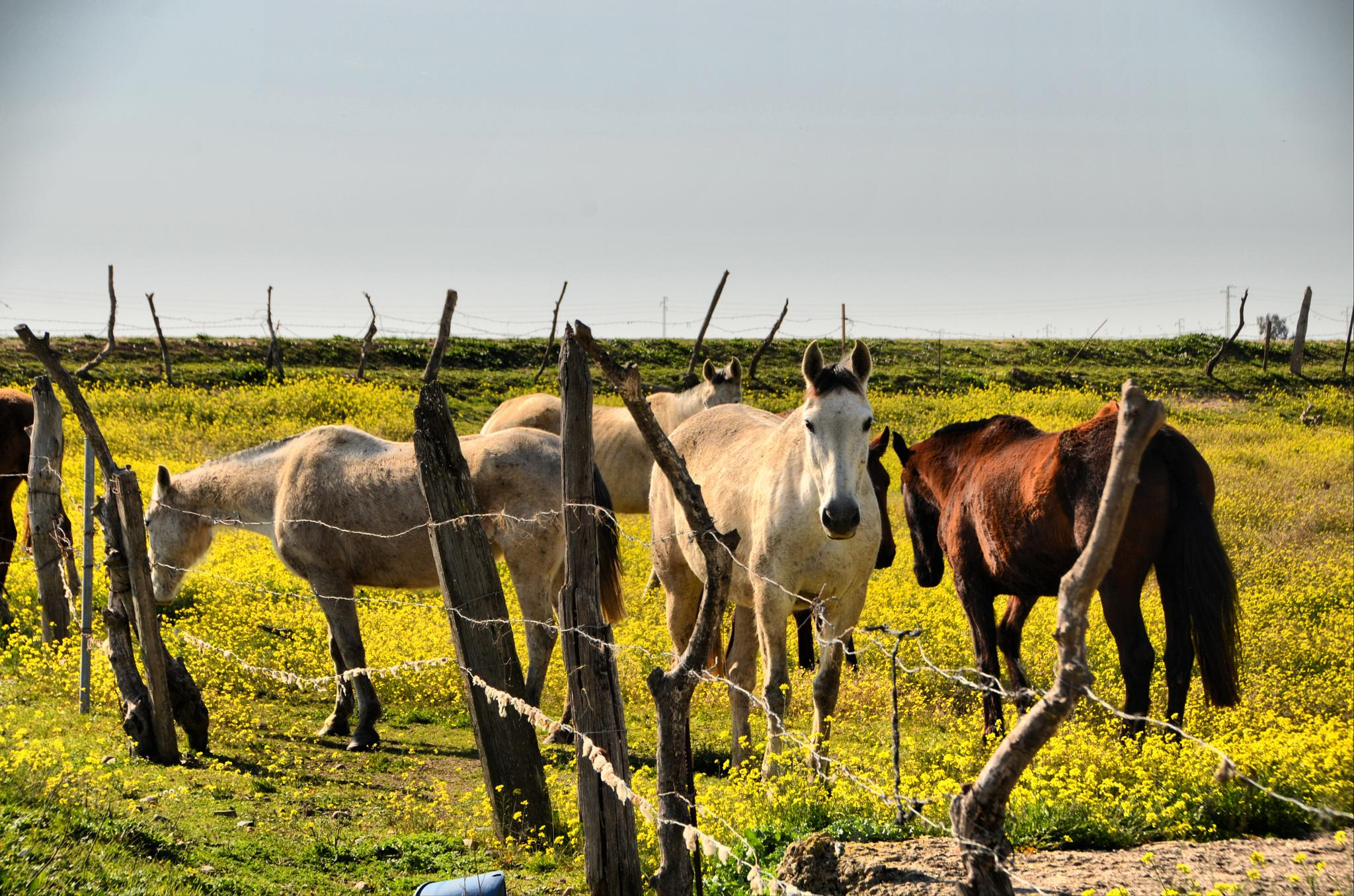 Horses 1 by Jorge Alonso